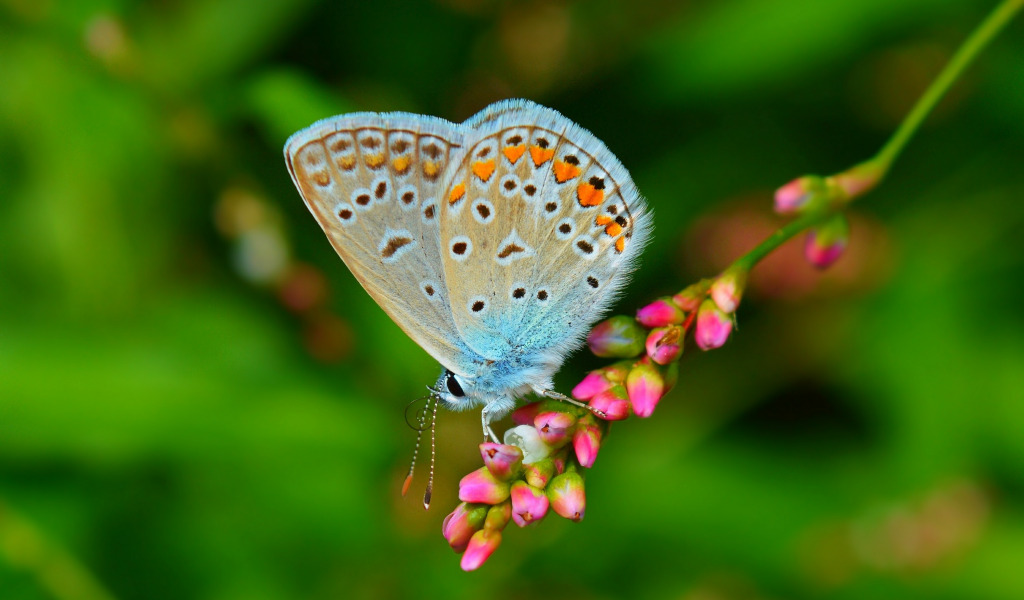 Бабочки растение макро  № 3660392 загрузить