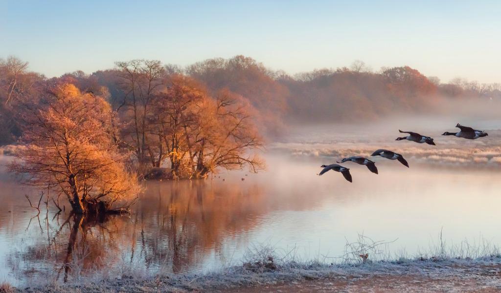 Туман вдоль реки  № 1281435 бесплатно
