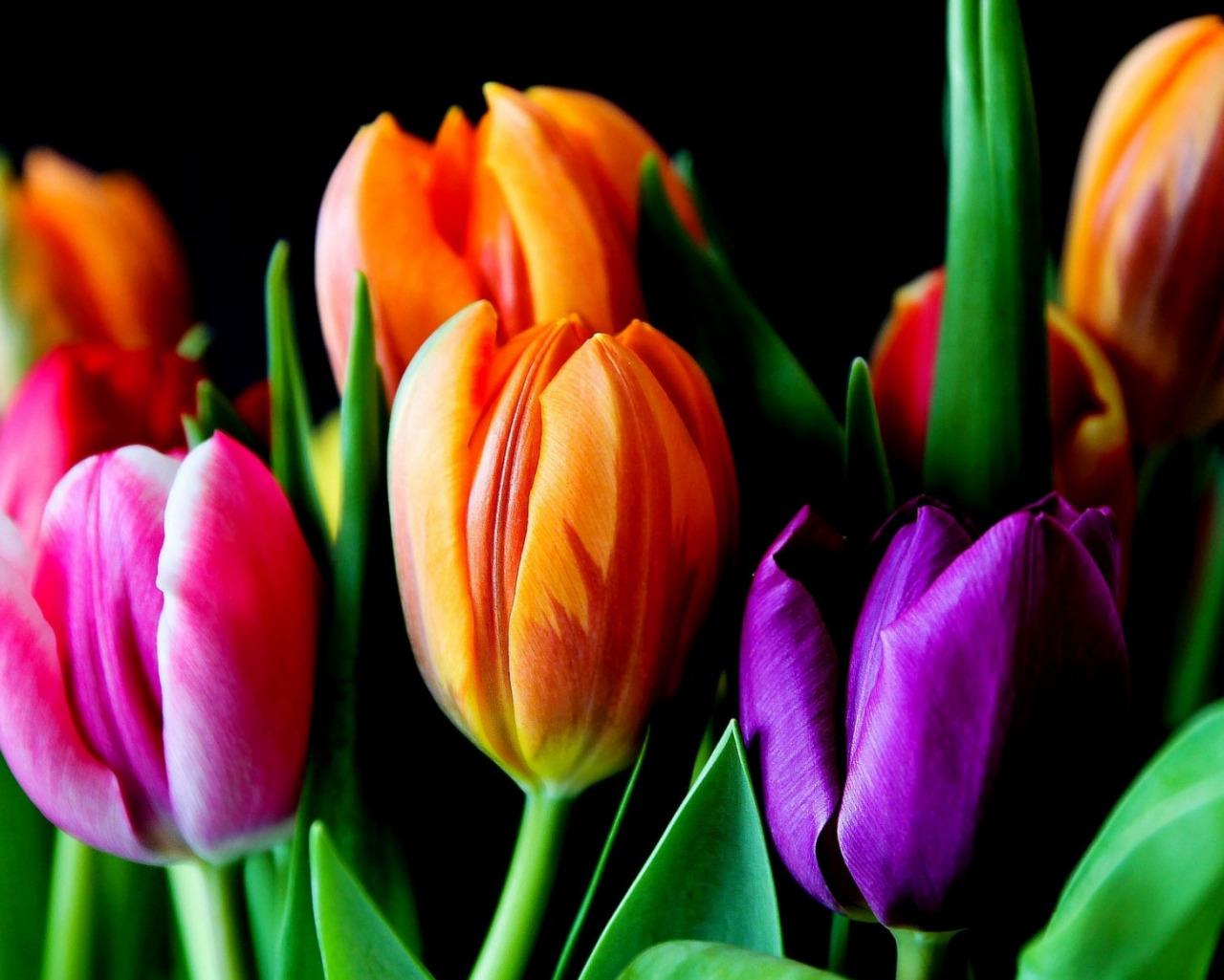 букет,тюльпаны,листья  № 415668 бесплатно
