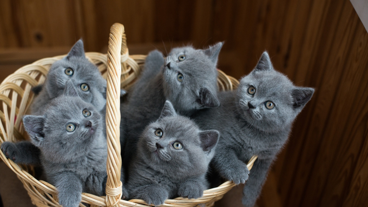 стоит картинки с серыми кошками на рабочий стол интервью