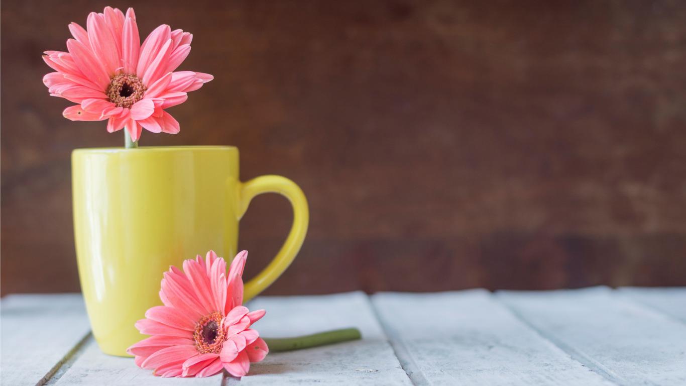 природа цветы чашка  № 1486728 загрузить
