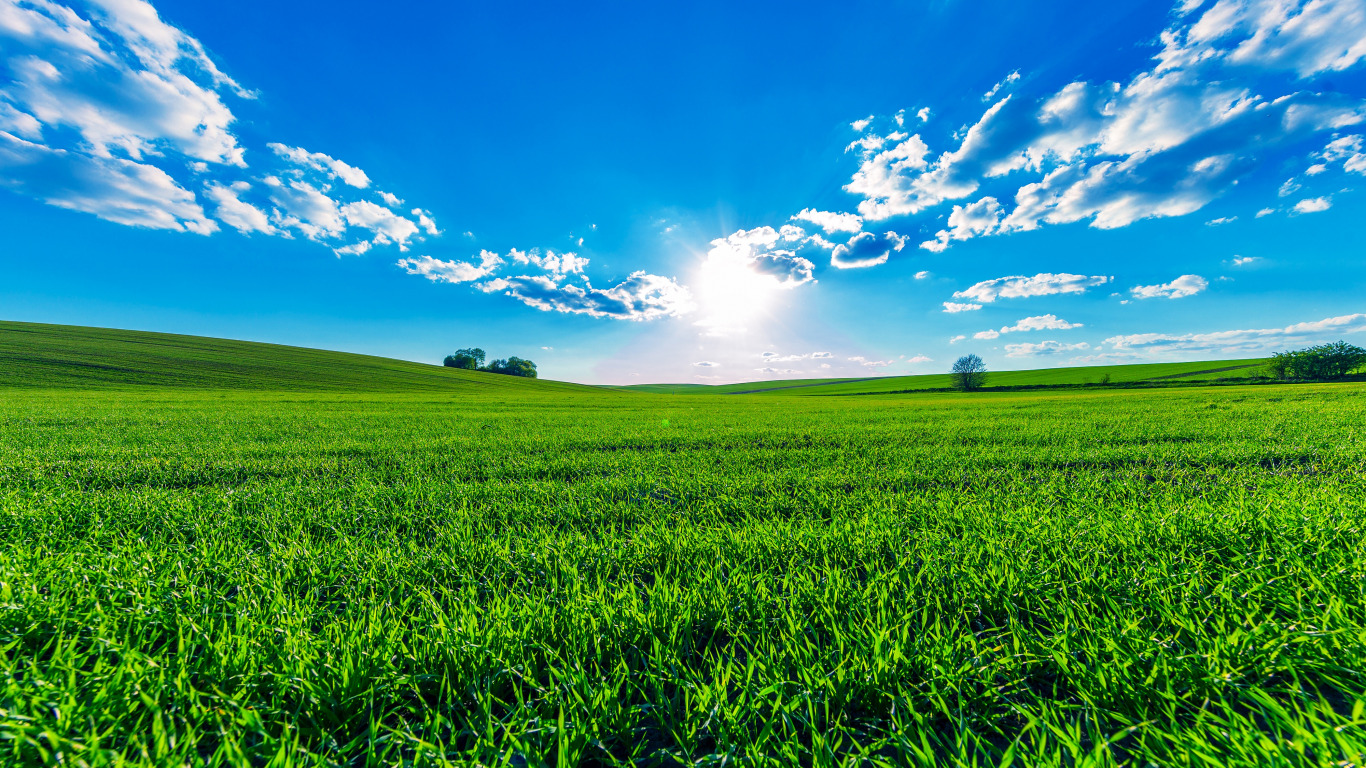 leto-solntse-zelen-pole-trava-derevia-ne