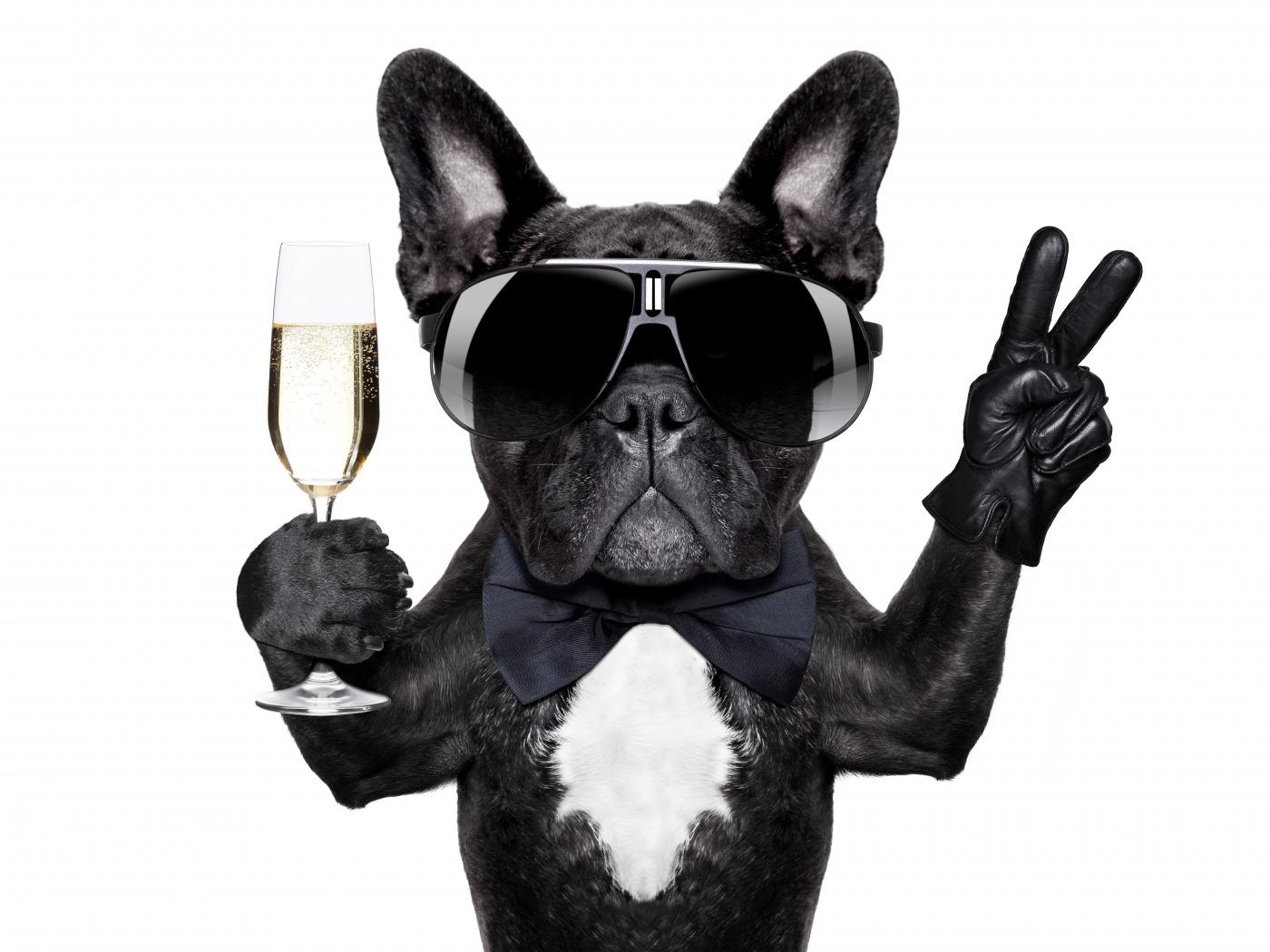Собака животное французский бульдог  № 2228199 бесплатно