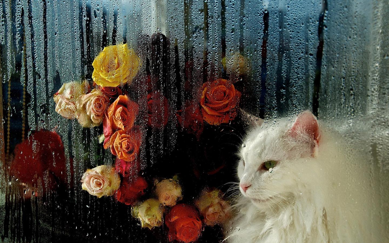 Картинки хорошего настроения в дождь, своими руками