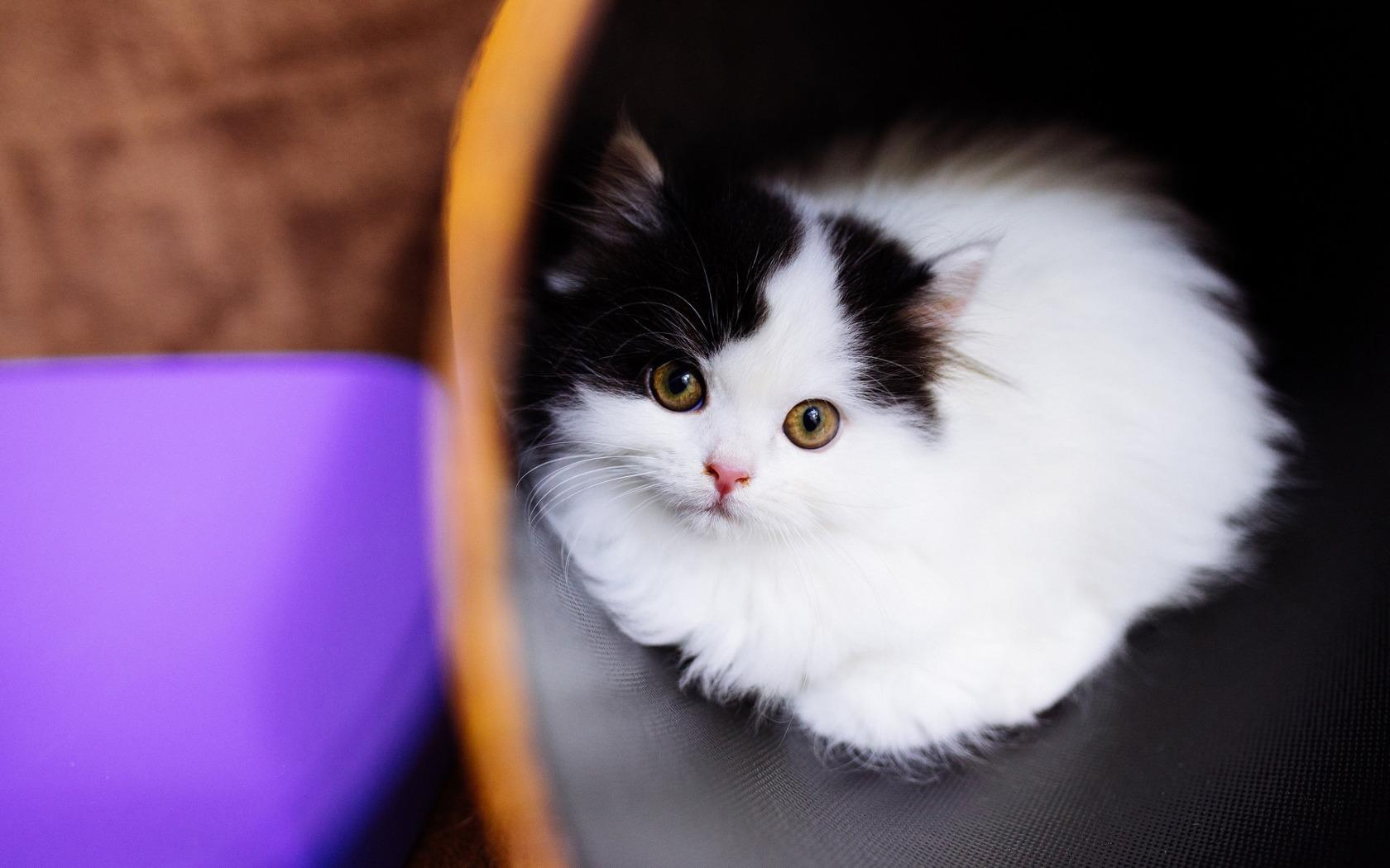 умение черный и белый котята на столе картинка мне хотелось бы