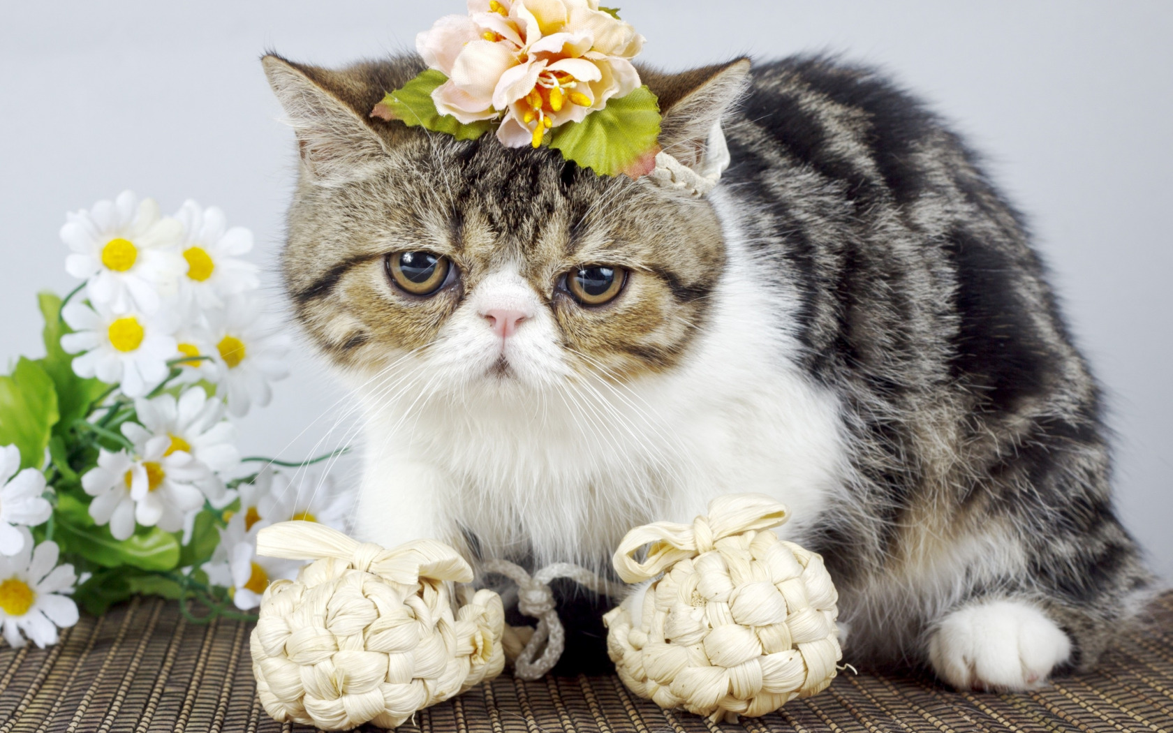 Фото персидских котят с цветами