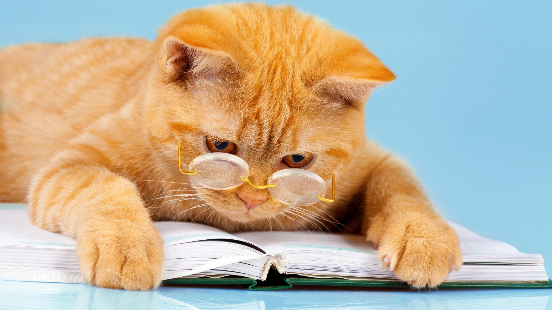 Картинки на рабочий стол веселые коты