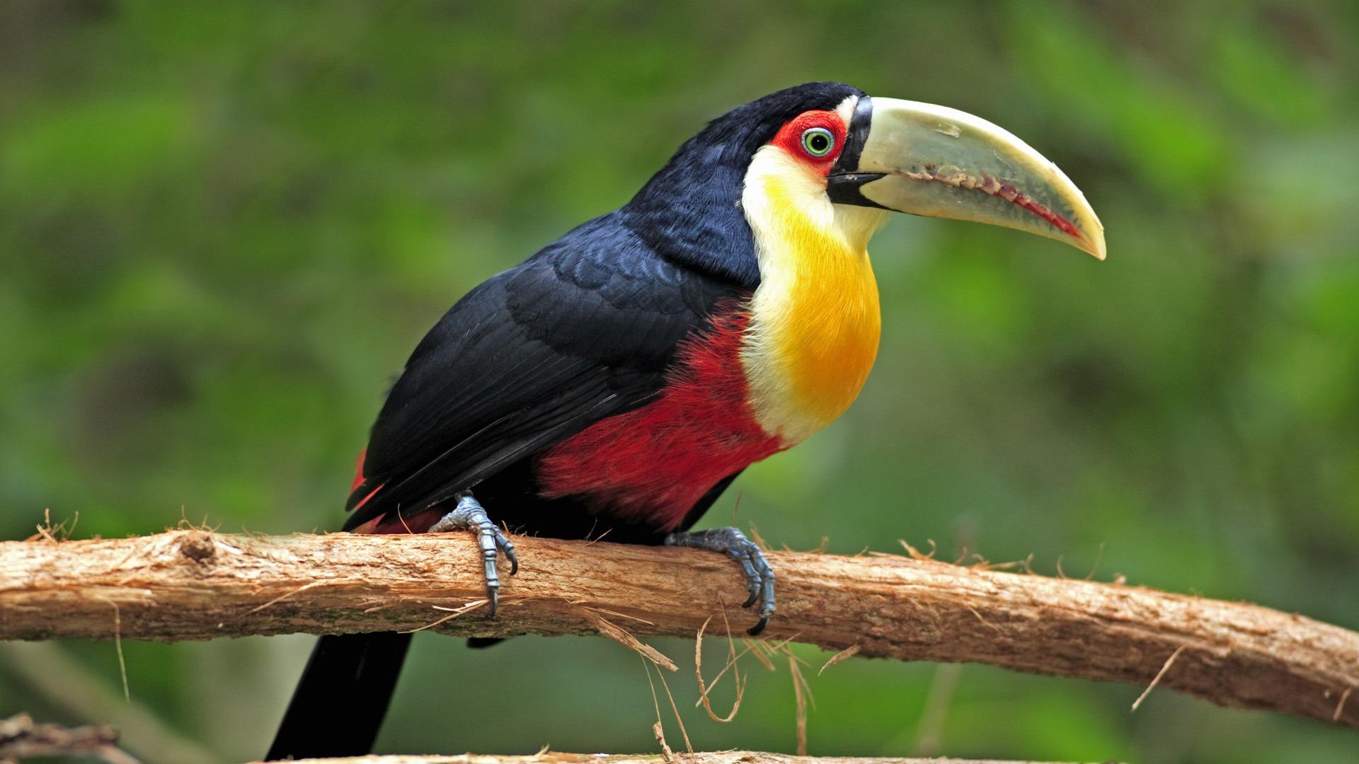 картинки про птицы животные этом случае бульон