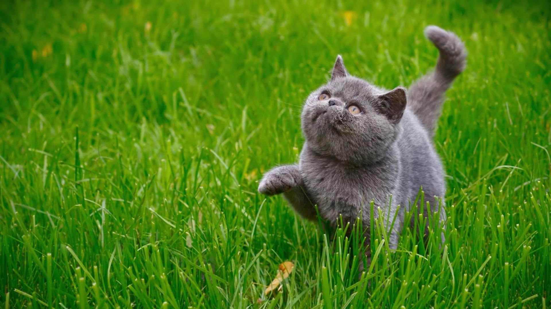 Коти фото на трави