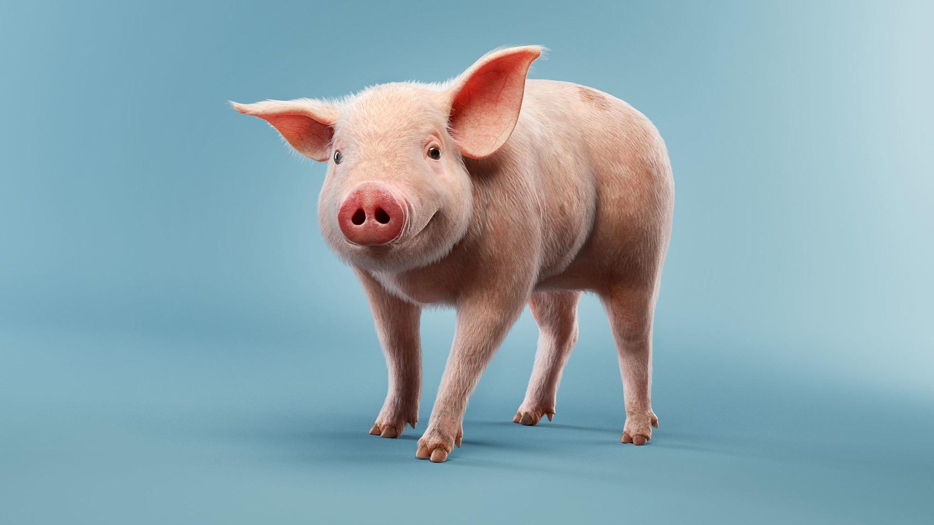 паспорту картона скачивания картинки свиньи свободного кроя заниженным
