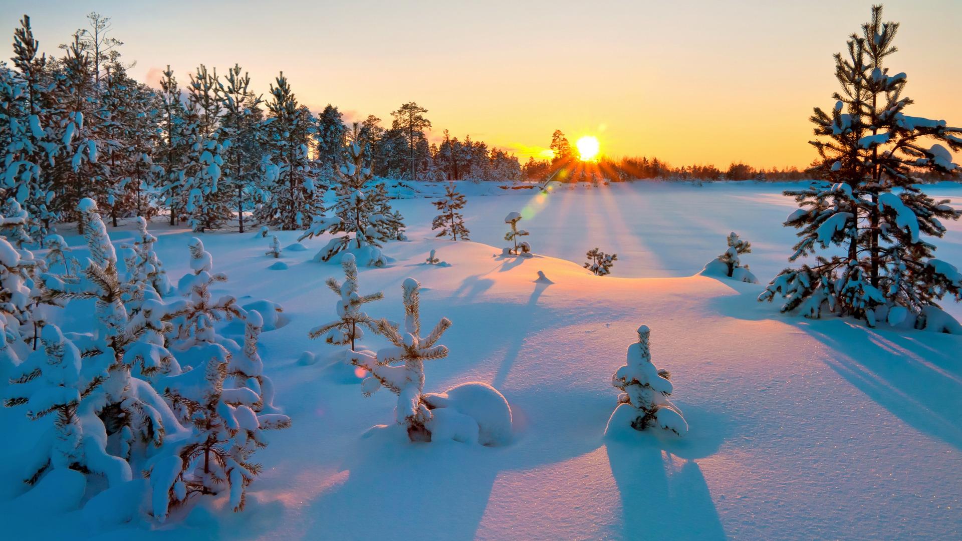 Обои зима сказочный лес 7