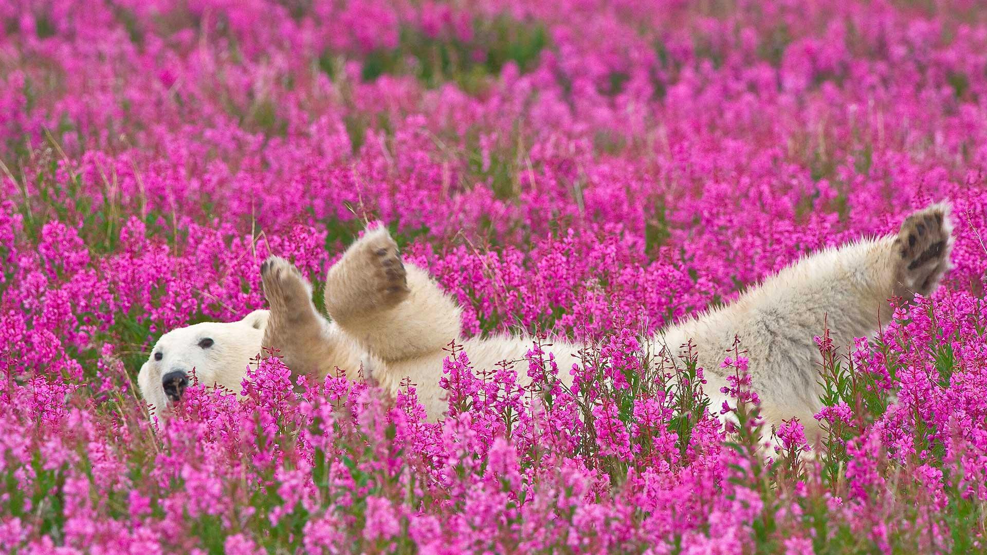 банке красивые фото природы в белых рамках любым транспортом