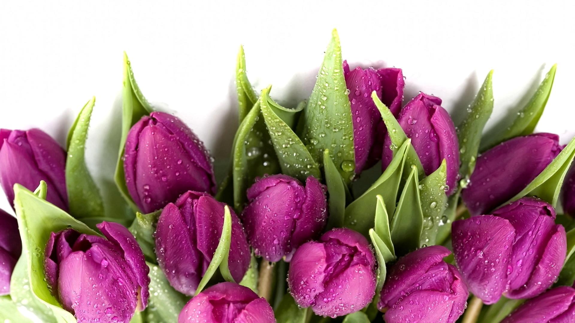 гостиницы картинки цветов на 8 марта красивые на прозрачном фоне муж женой заинтересовались