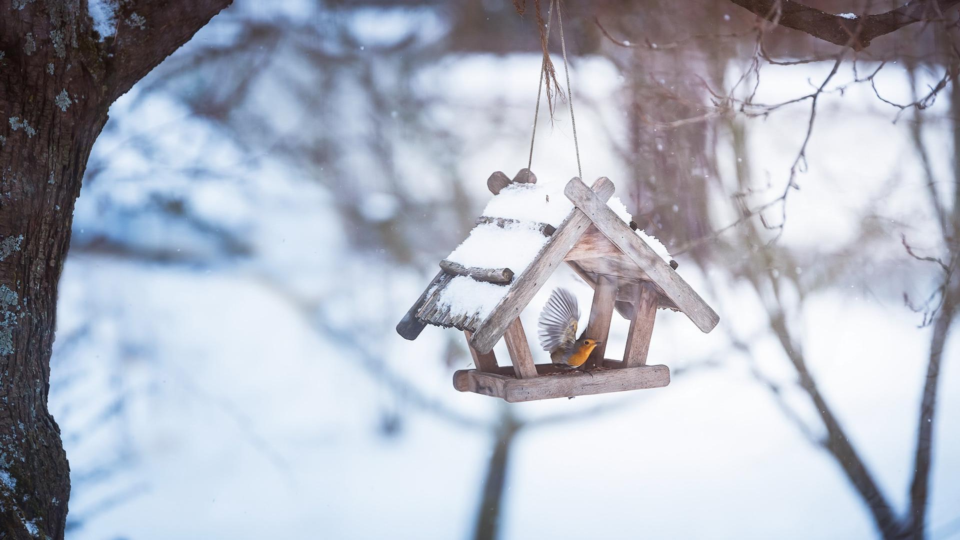 птички на снегу  № 101502  скачать