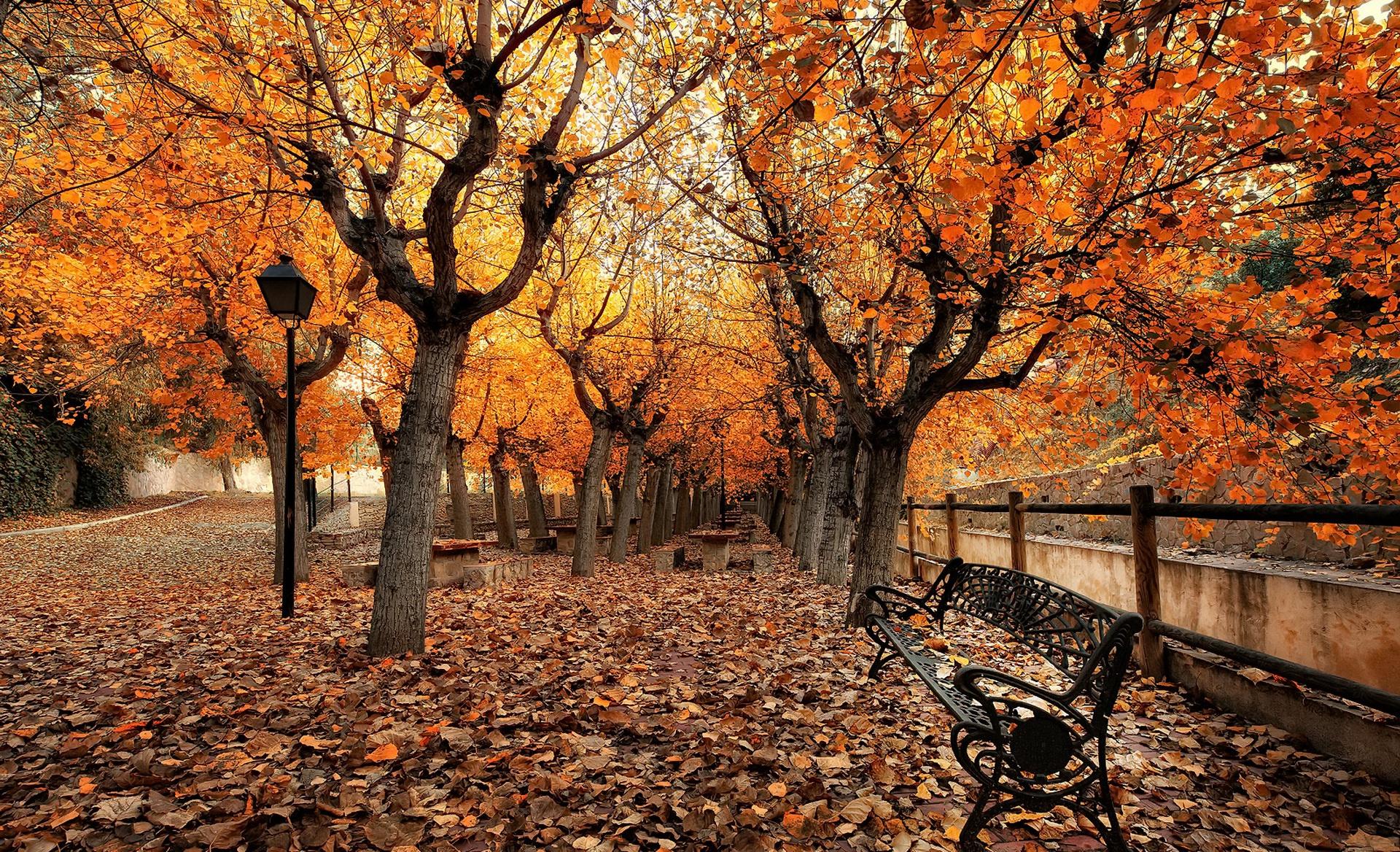 картинки красивые на тему осень в городе активно использовал