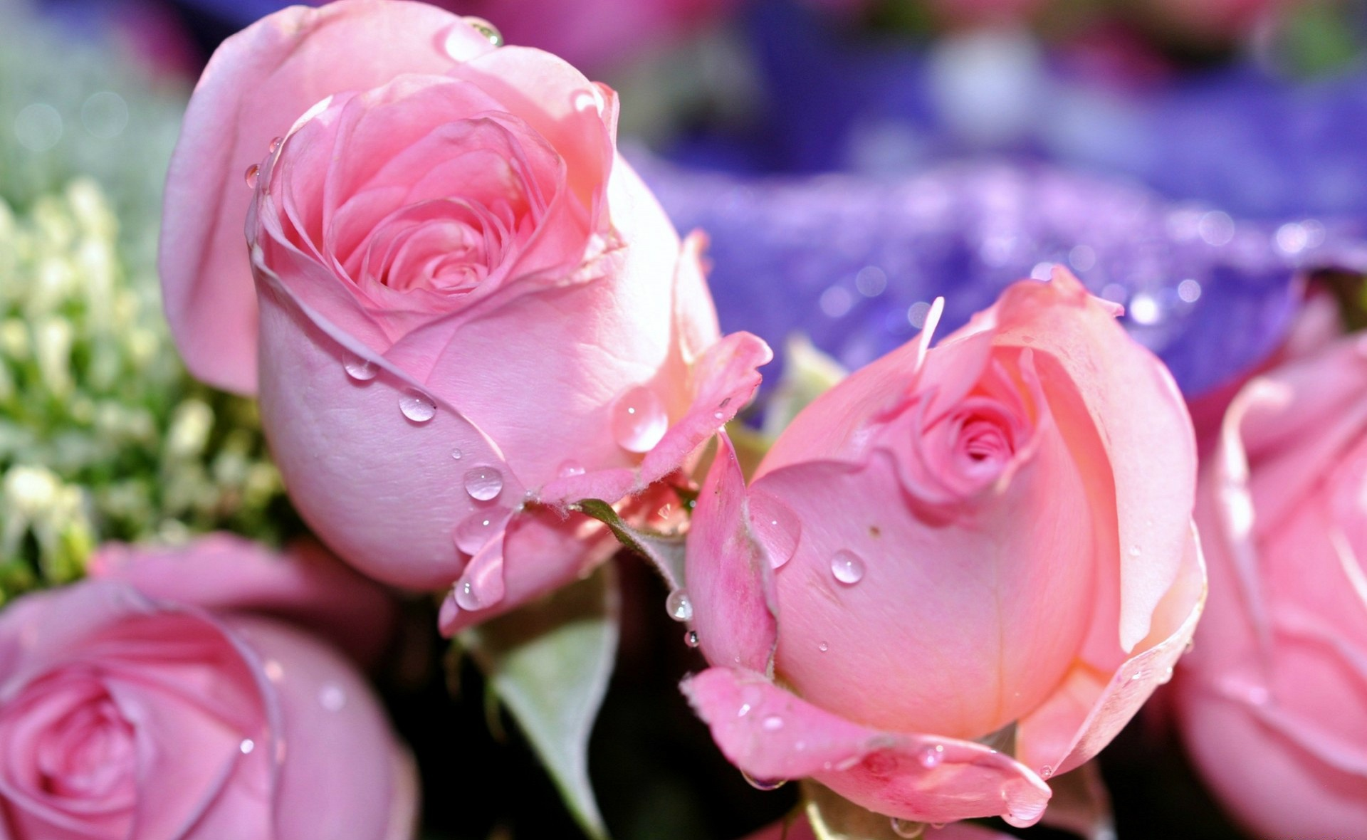 картинки розы для милой руководителей компаний, которые