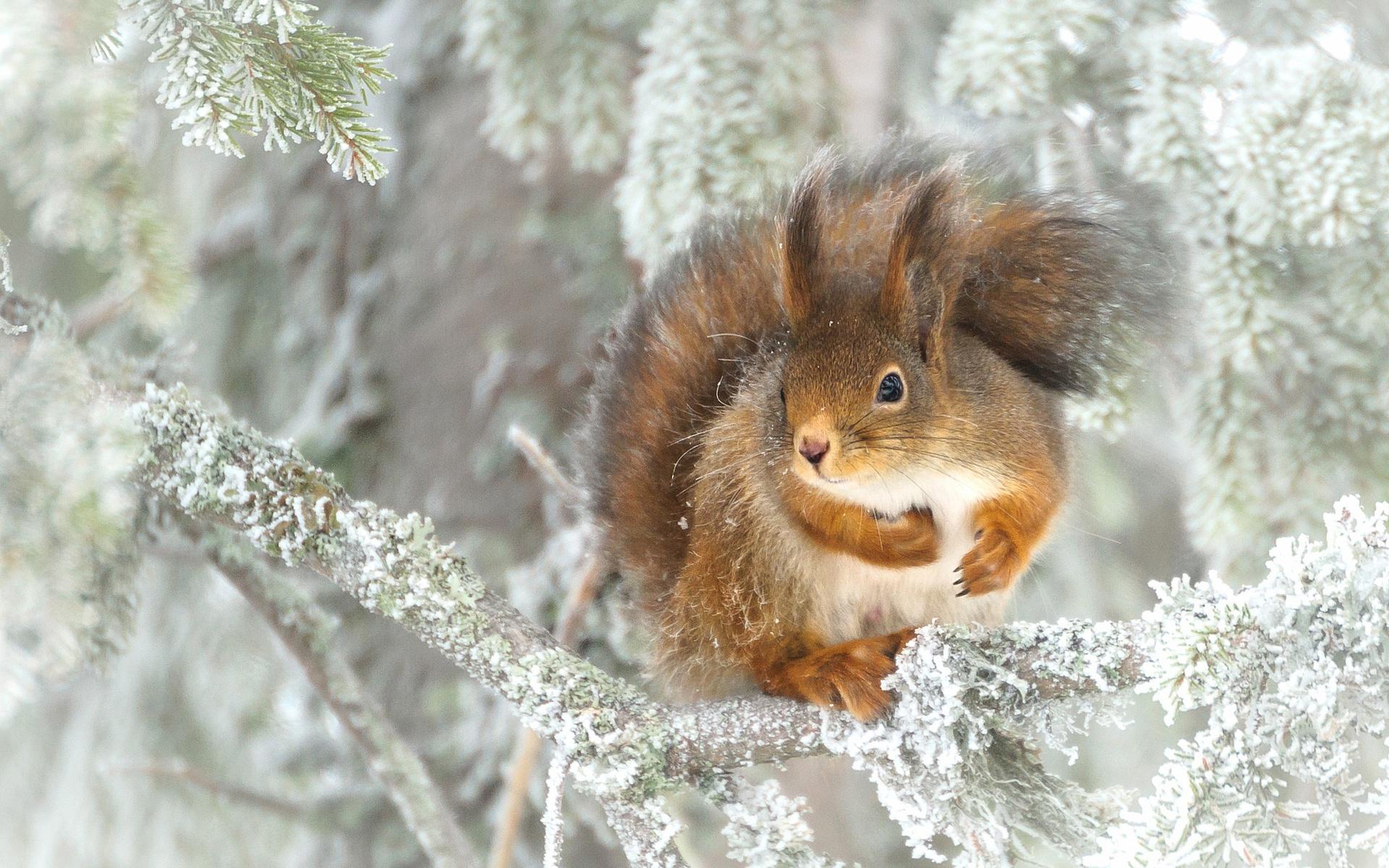 новогодних блюд лесные животные фото новогодние приглашения, буклеты флаеры