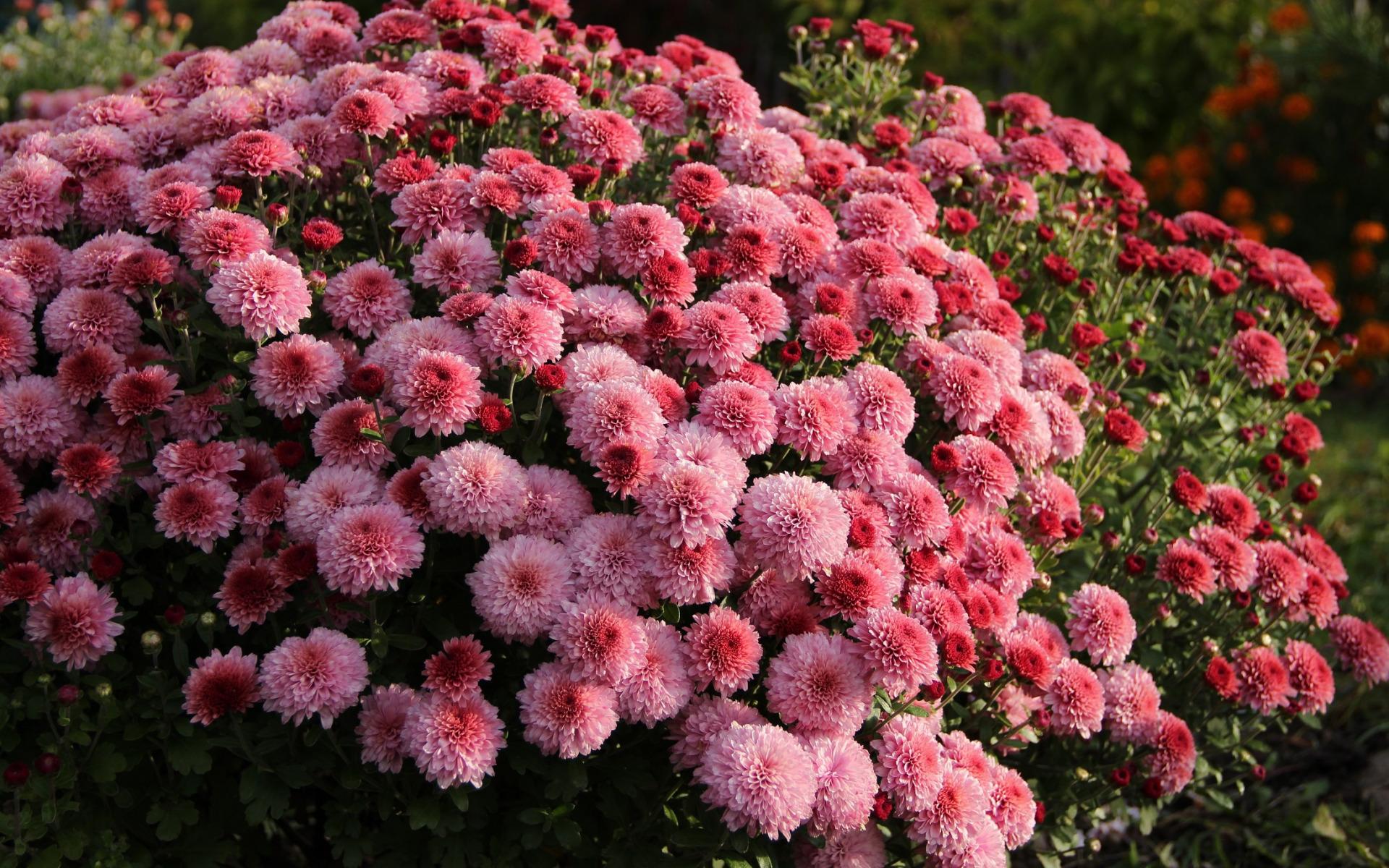 картинки дубочки цветы