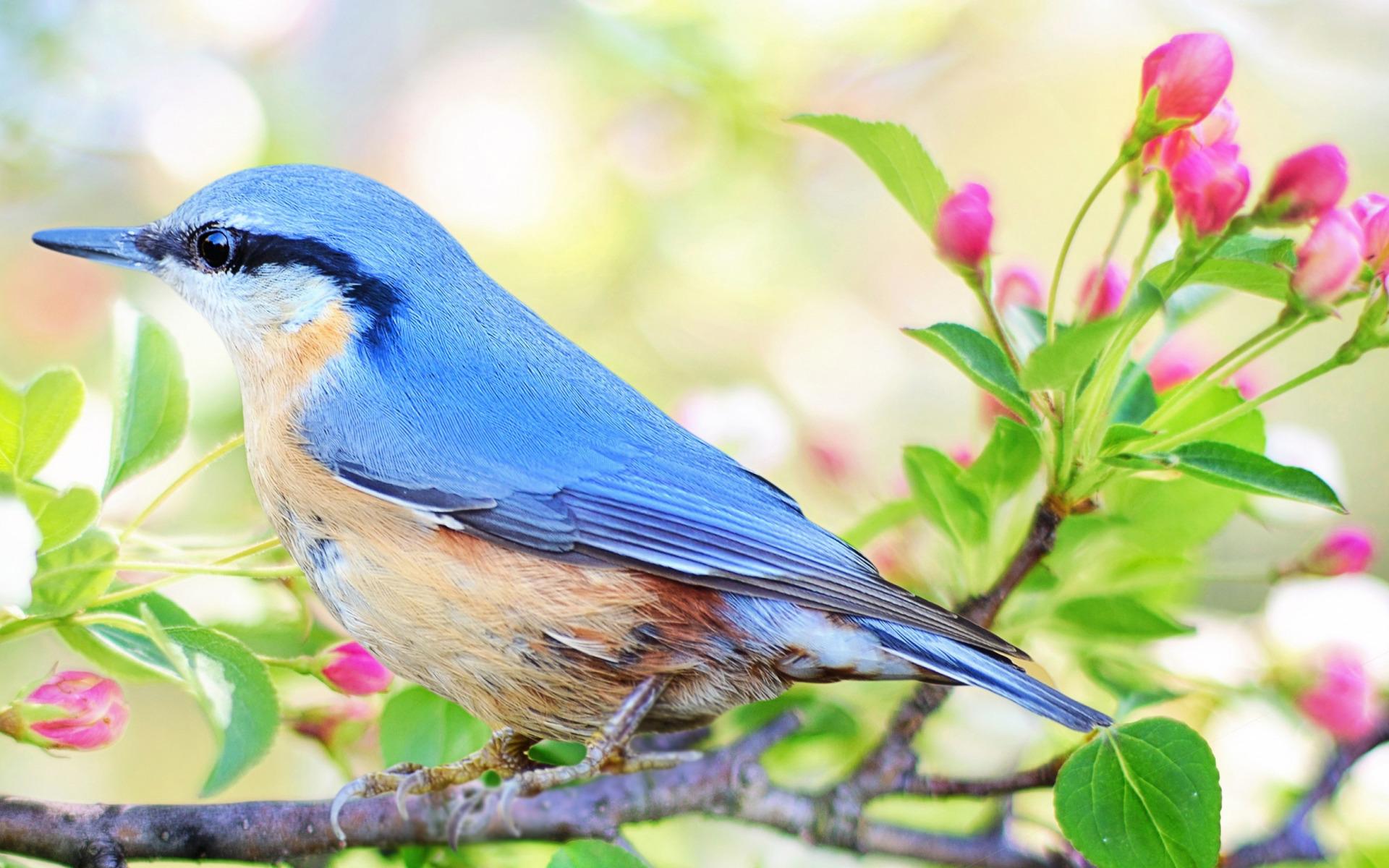 природа картинки птички проходят одном