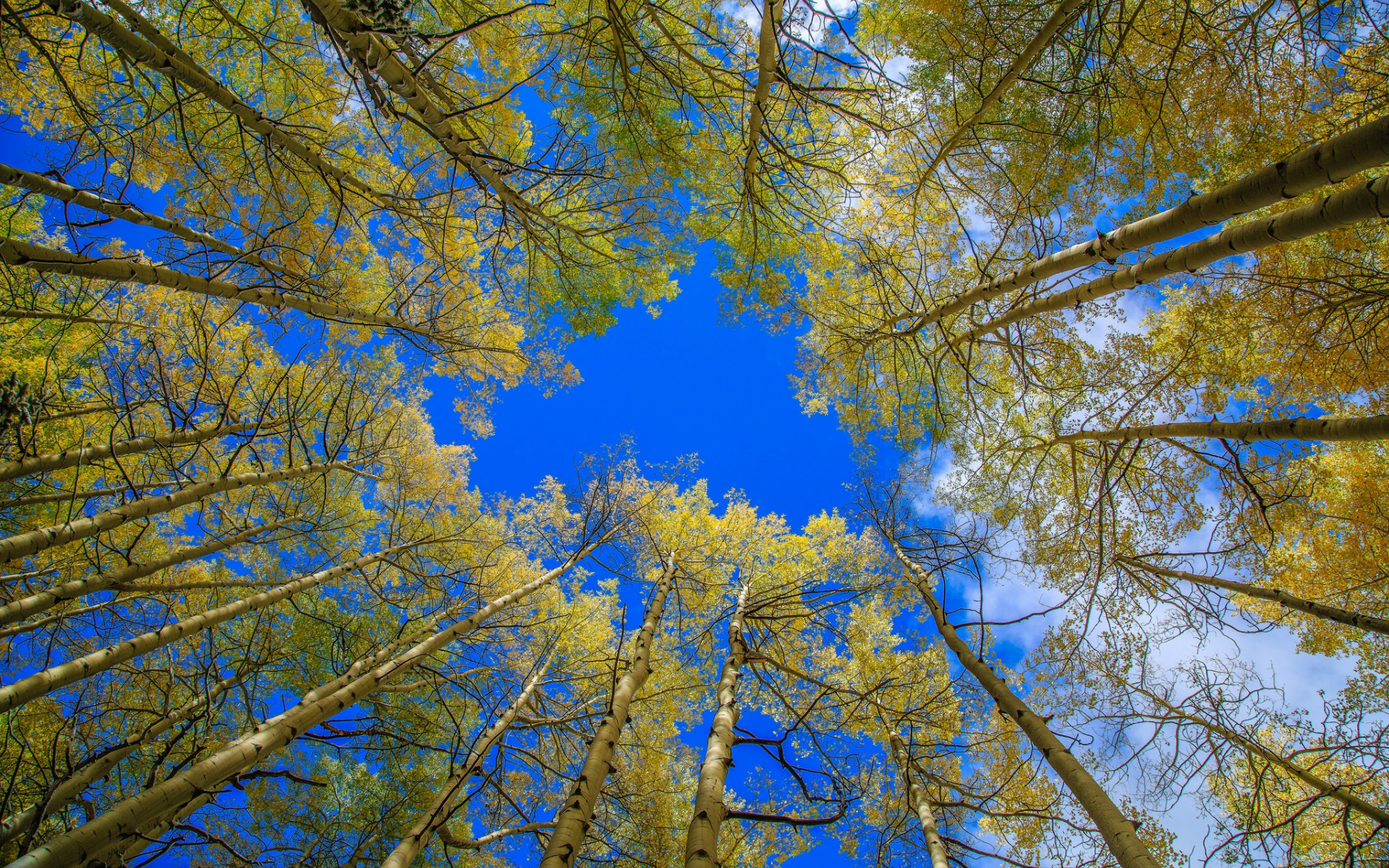 картинки небо сквозь деревья