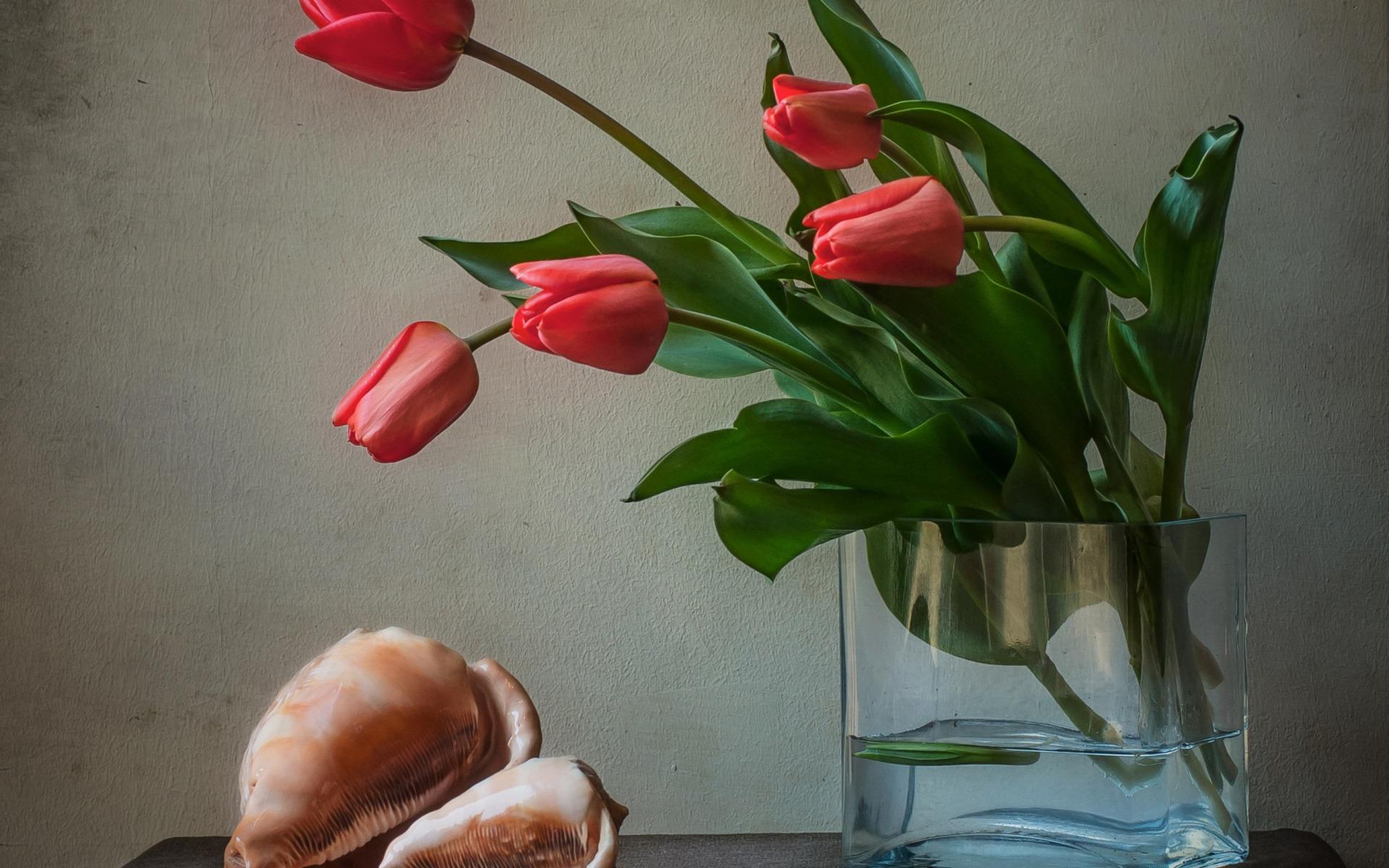 Фото для, картинки красивые тюльпаны в вазе