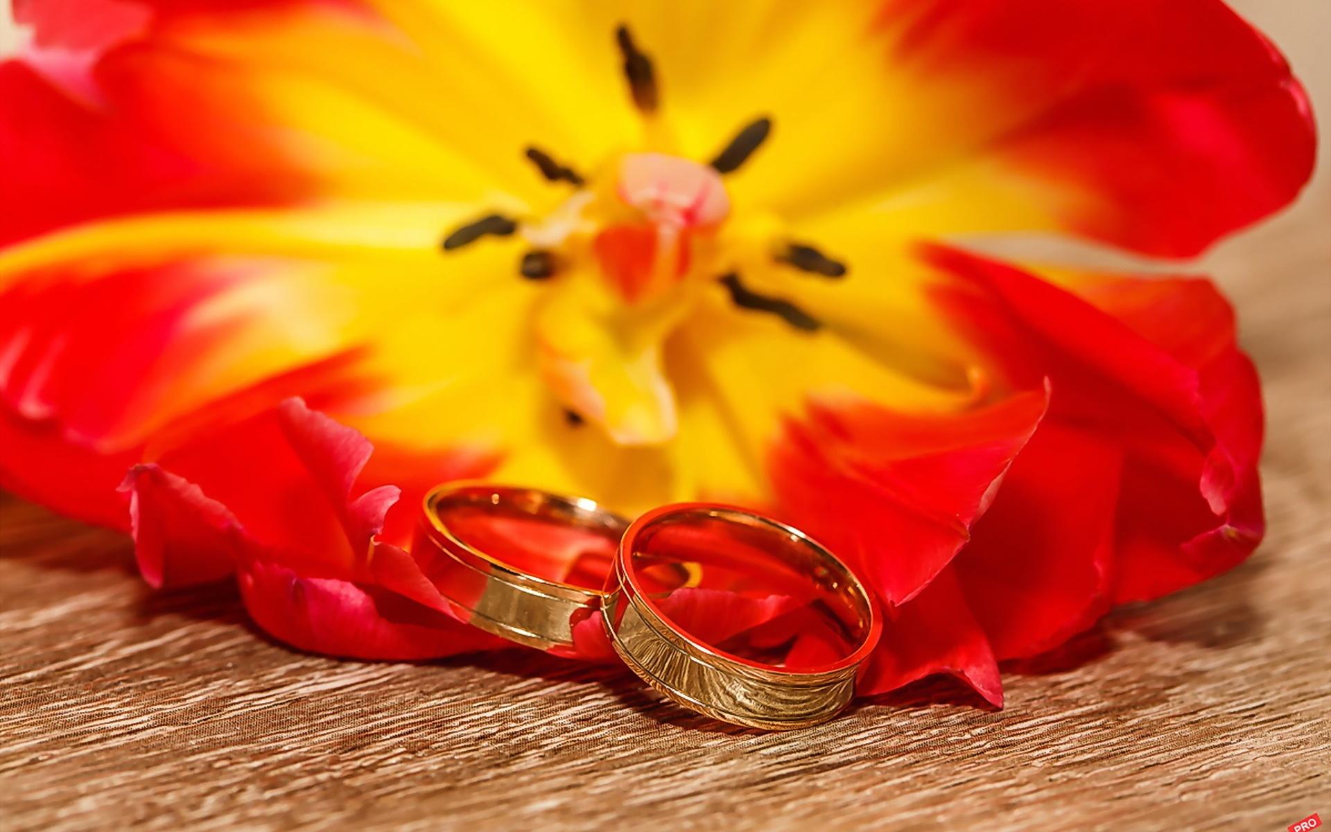 Красивые картинки обручальных колец на красном фоне