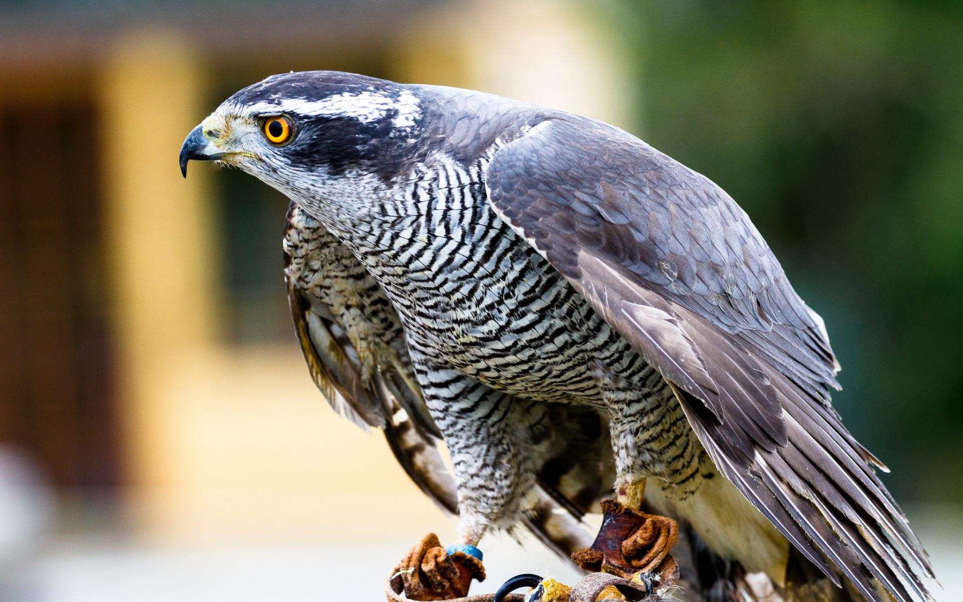 официальных хищные птицы беларуси фото с названиями обычного микроавтобуса