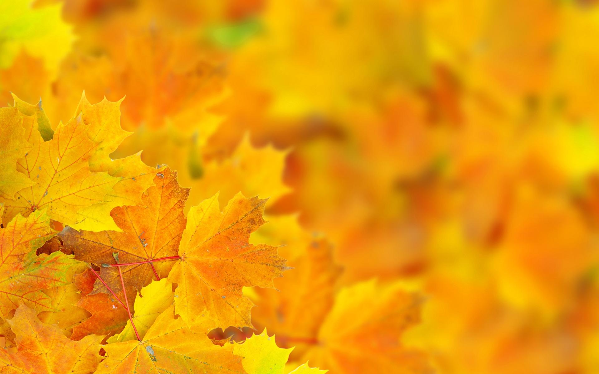 Днем рождения, открытка с желтыми листьями