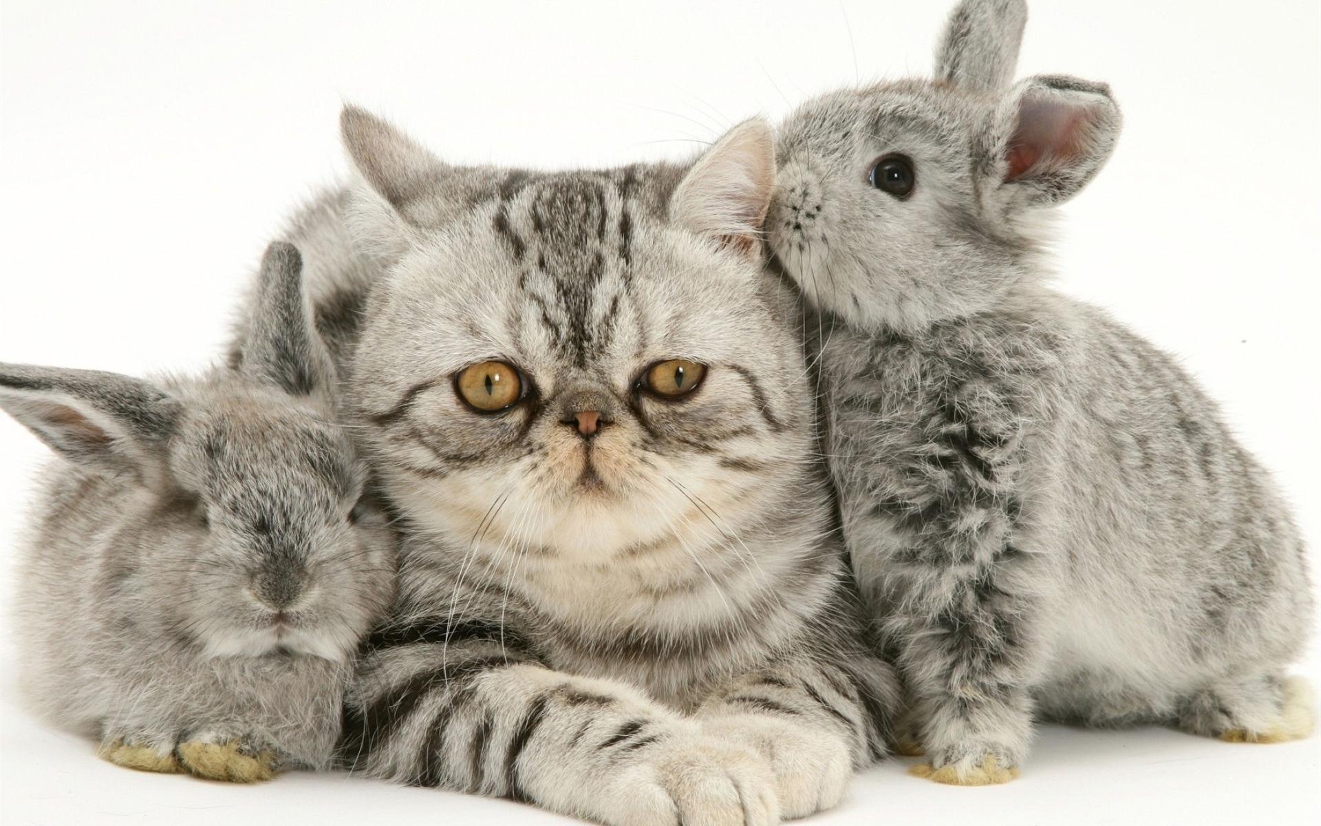Картинки про зайцев и котов, открытки пикселях
