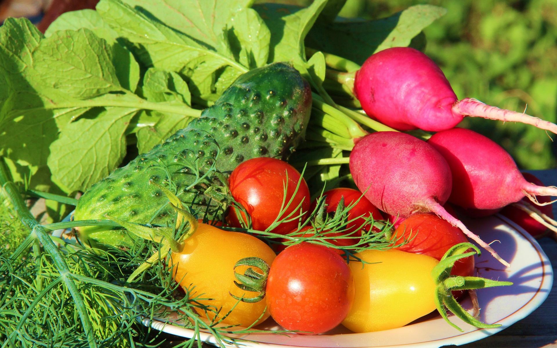 Овощи огородные в картинках