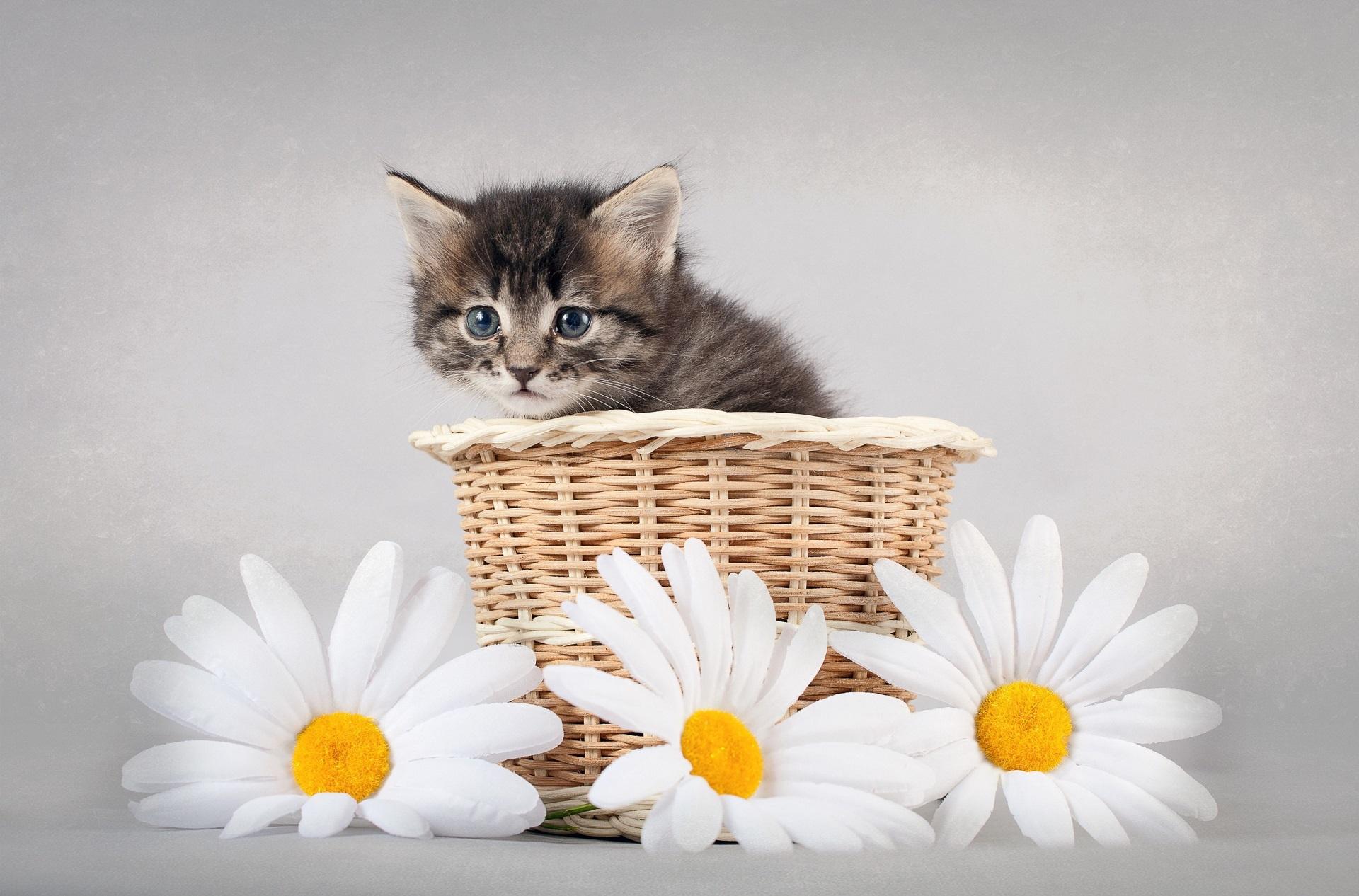 Поздравления с днем рождения с картинками с котиками