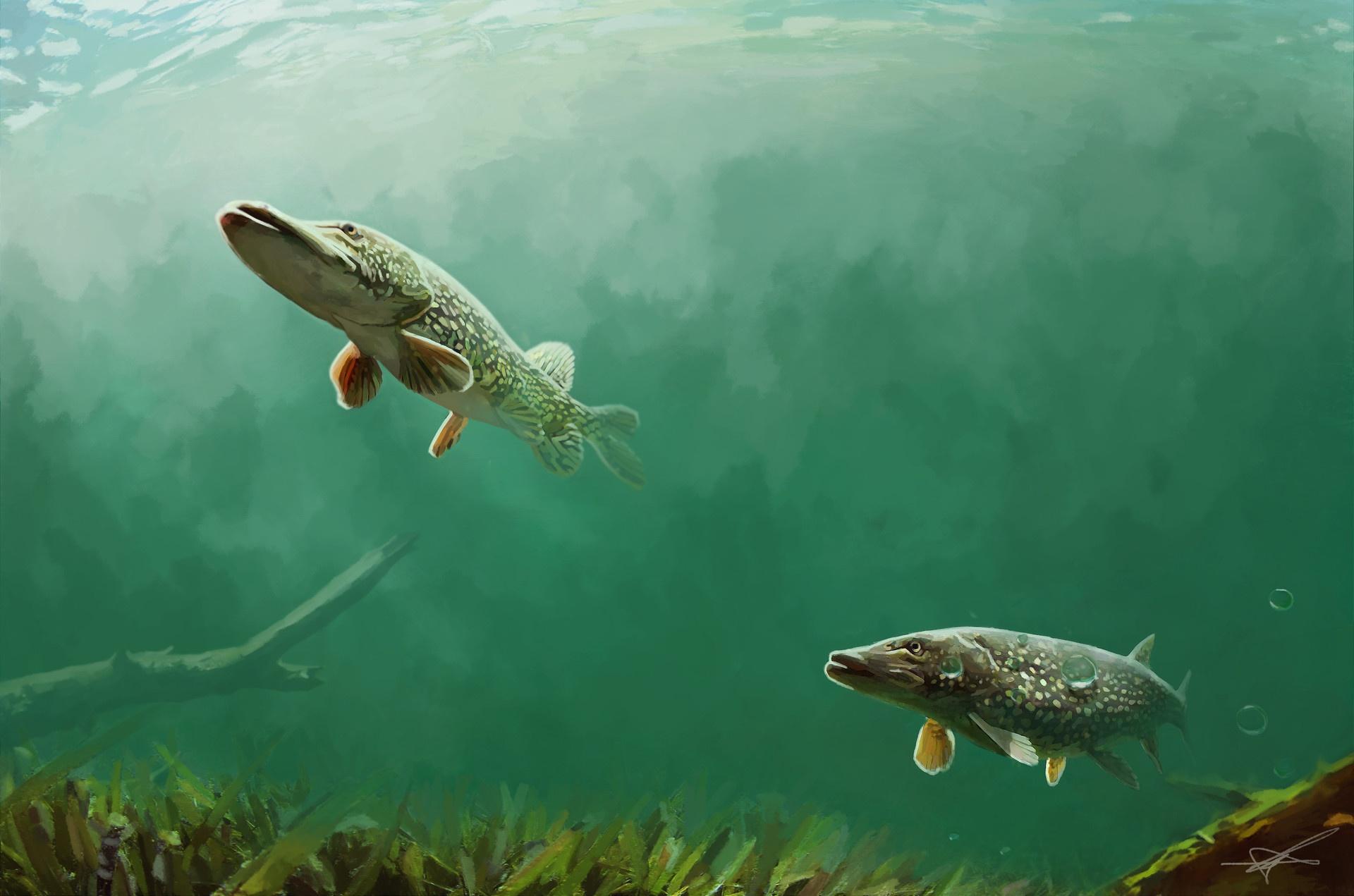 картинка щука в воде