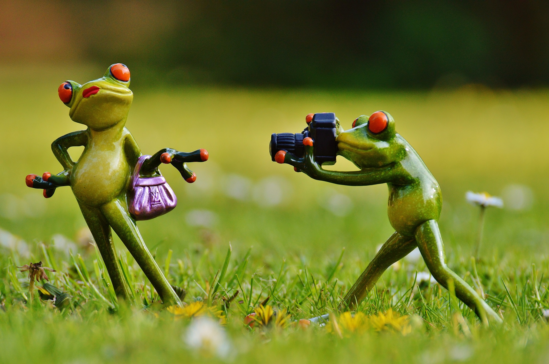 Картинки для, картинка лягушка путешественница смешная