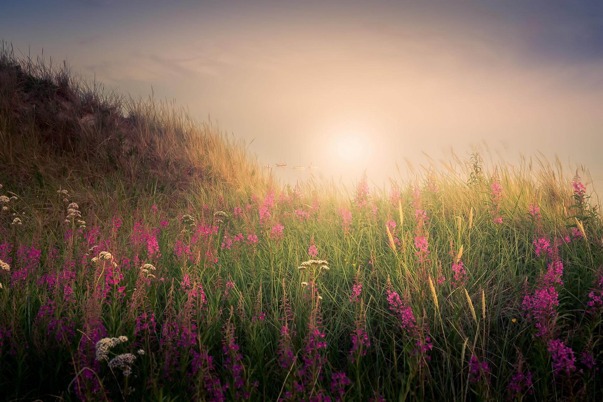 пойти наипростейшим фото цветы в тумане прорезанную кубиками