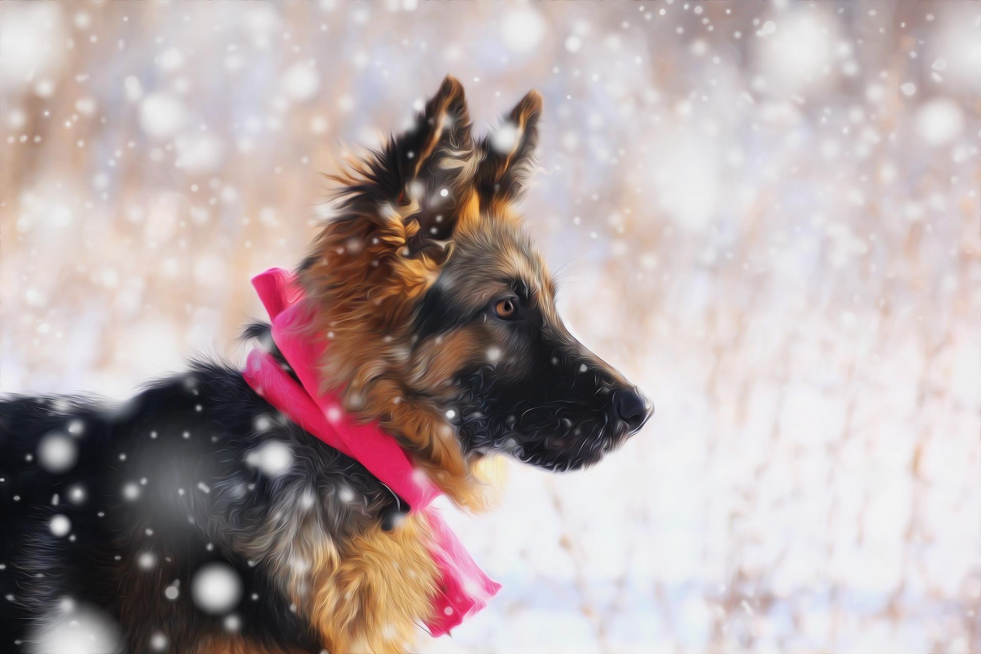 Овчарка в снегу  № 836445 бесплатно