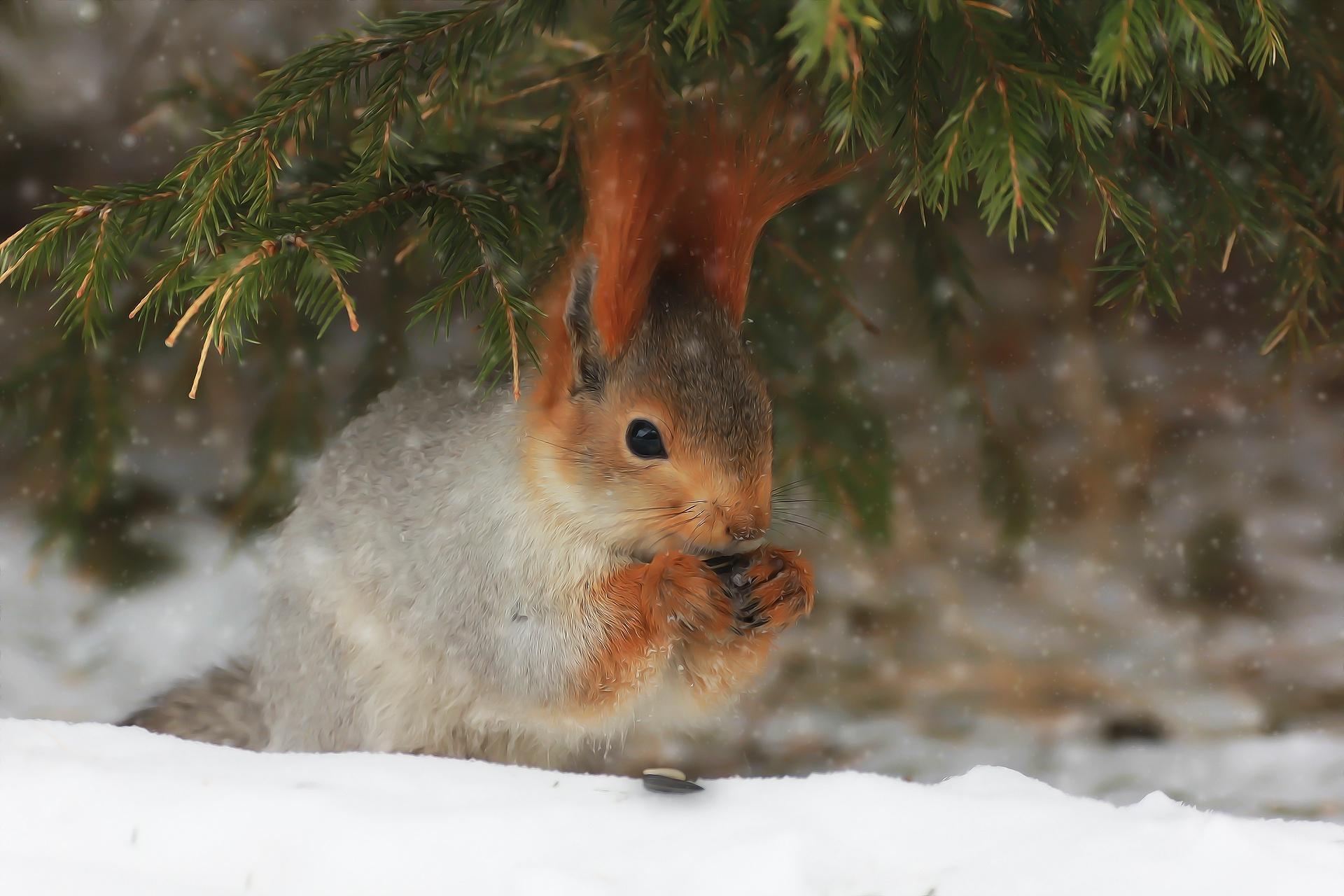 Лесные животные фото новогодние
