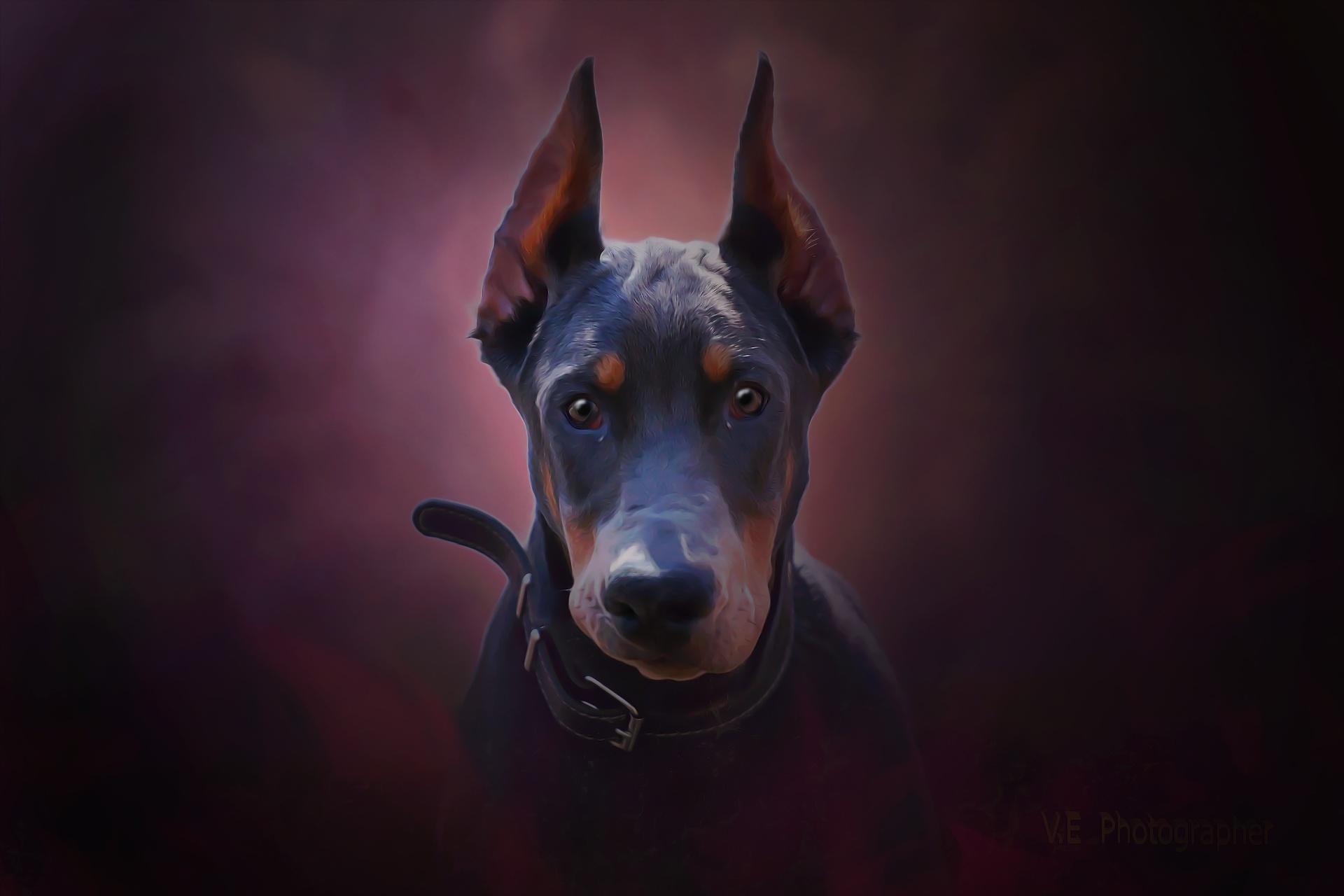 кроссовера картинки собак на рабочий стол доберман татуировку