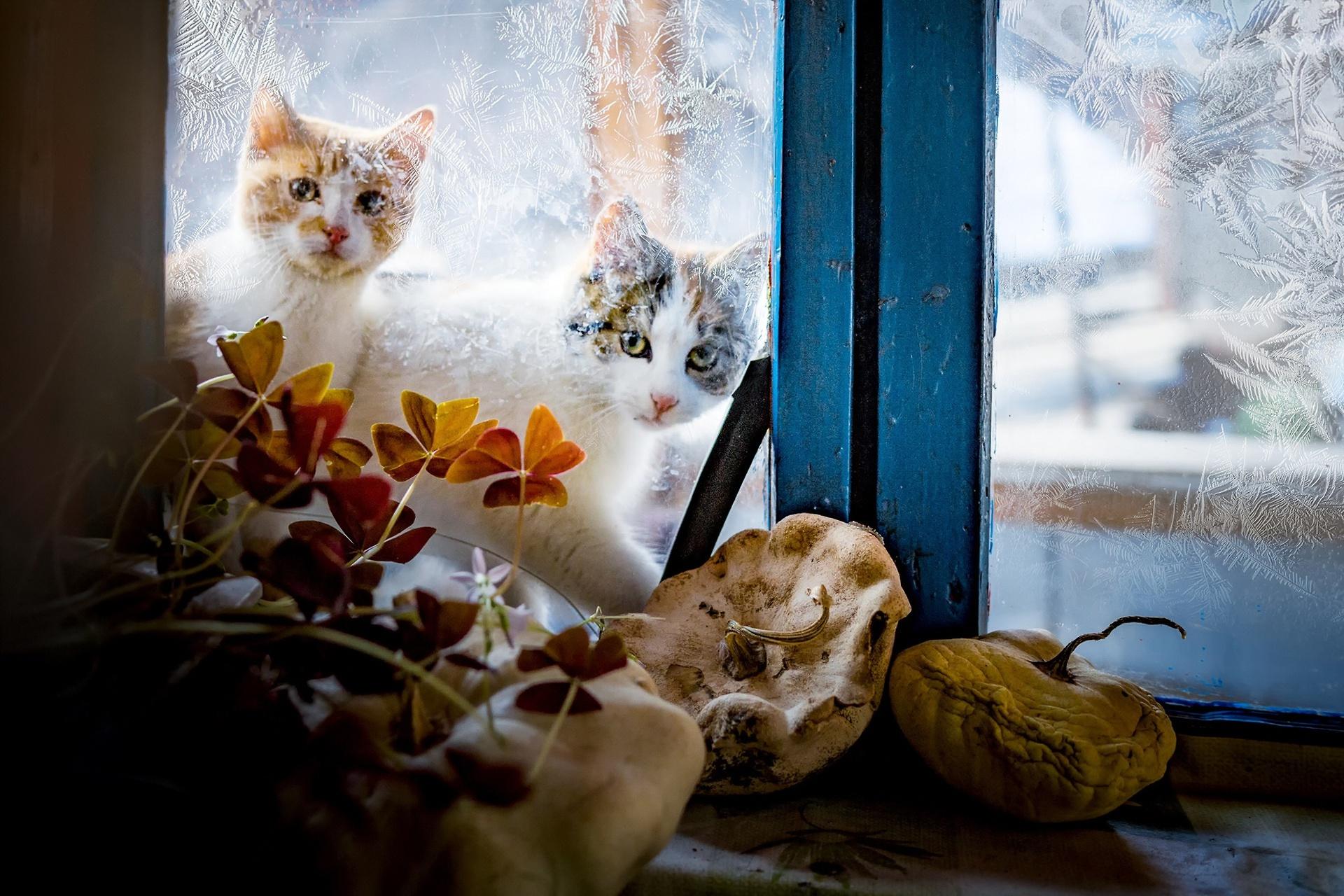 Картинки два котика черный и рыжий под пледом у окна зимой