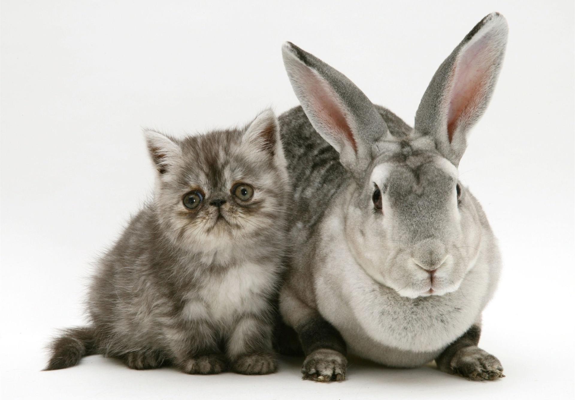 уверены, картинки с котятами и крольчатами это