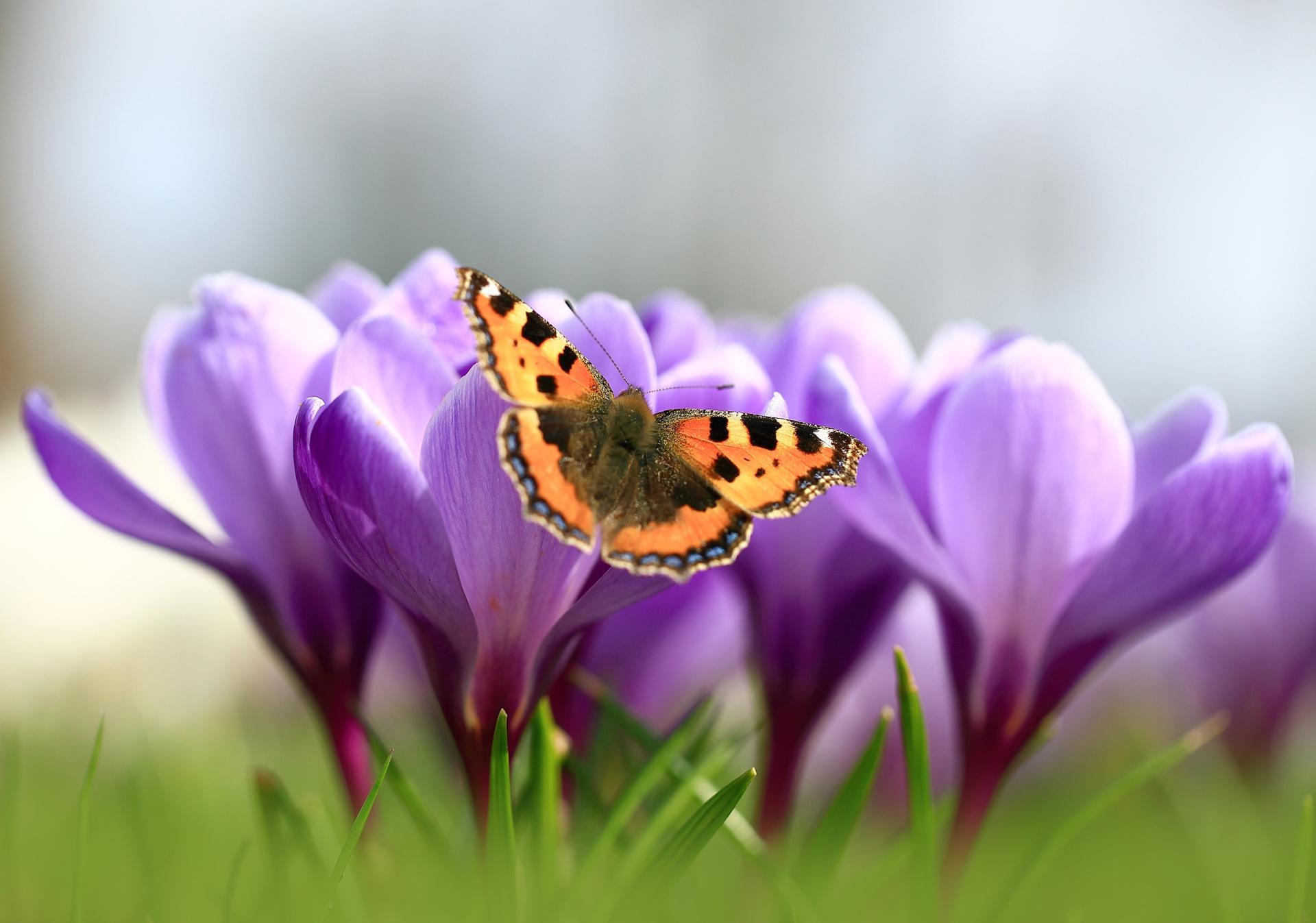 Картинки цветы и бабочки весна
