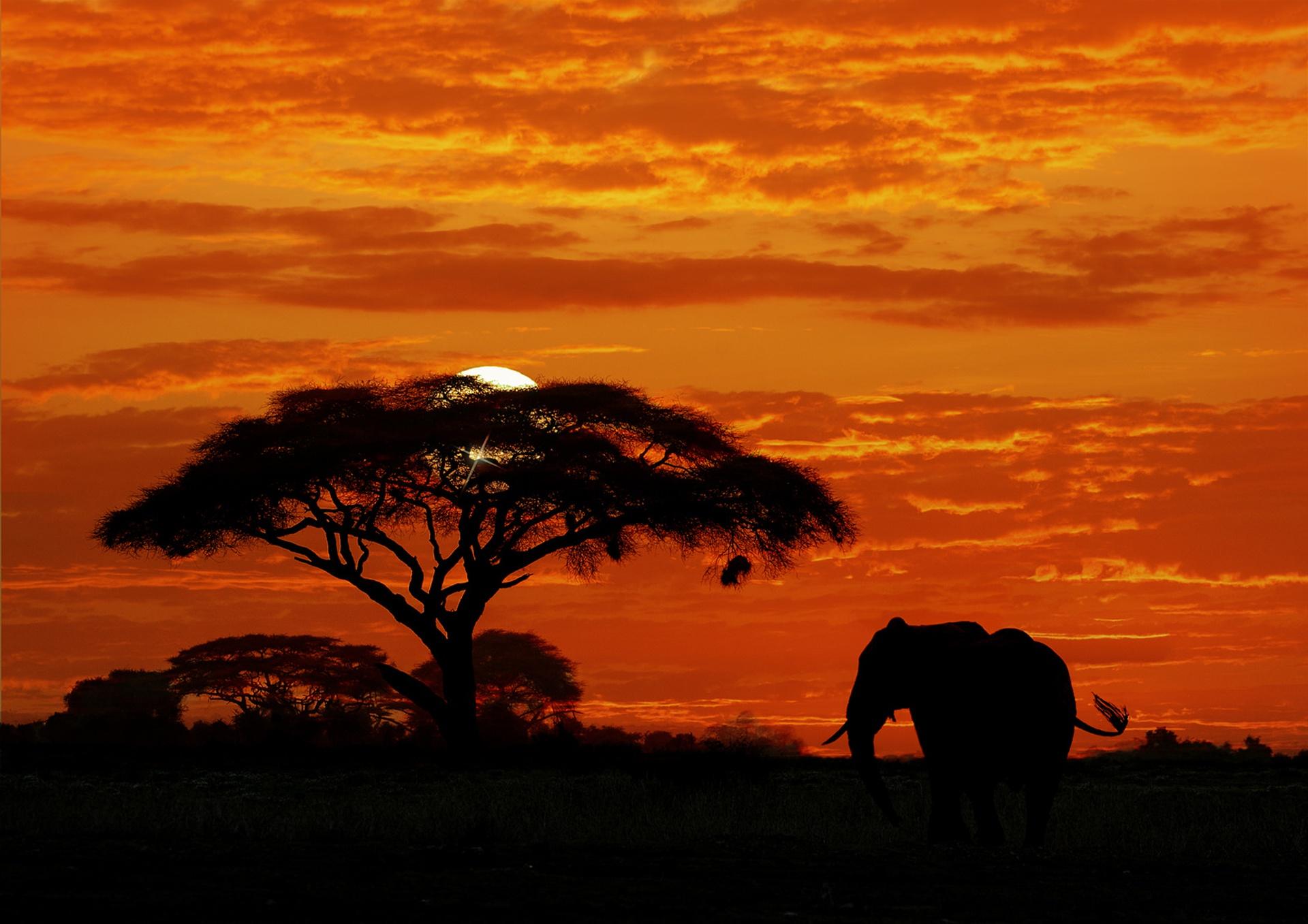 изображения характеризуются фотообои закат в африке пару дней нужно