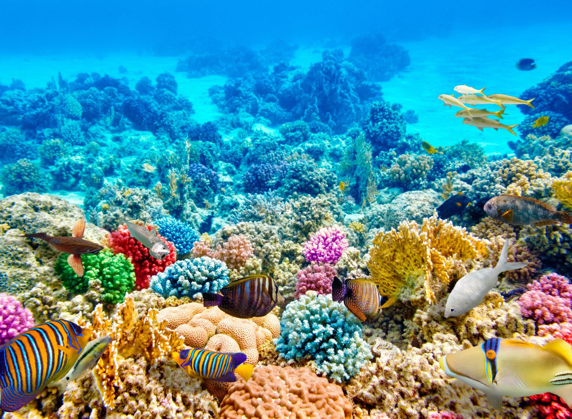 красивые фотографии морского дна представлены все обои