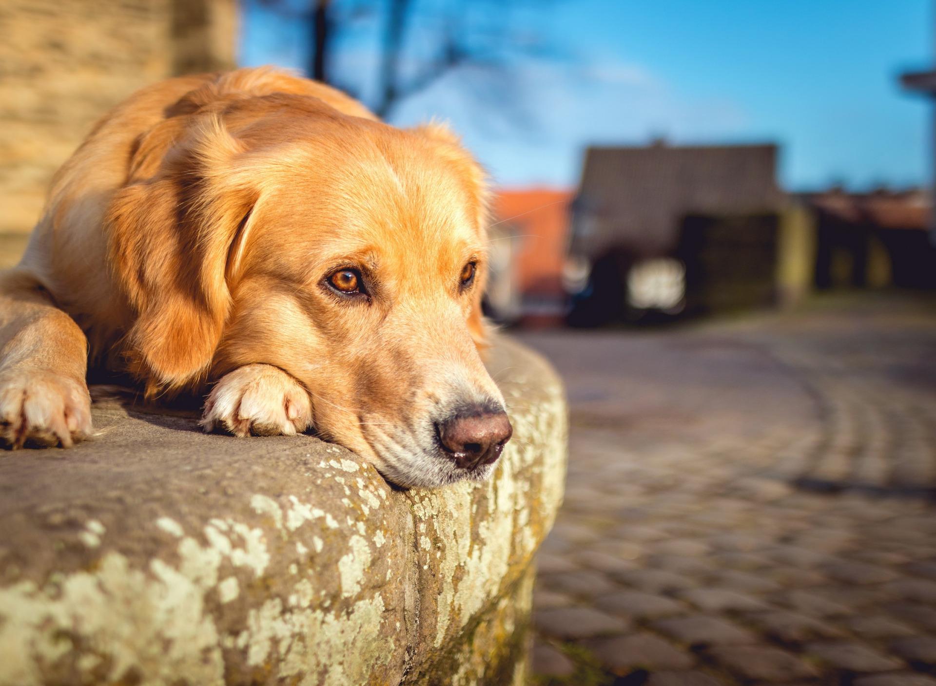 грустный щенок картинки она удобное место