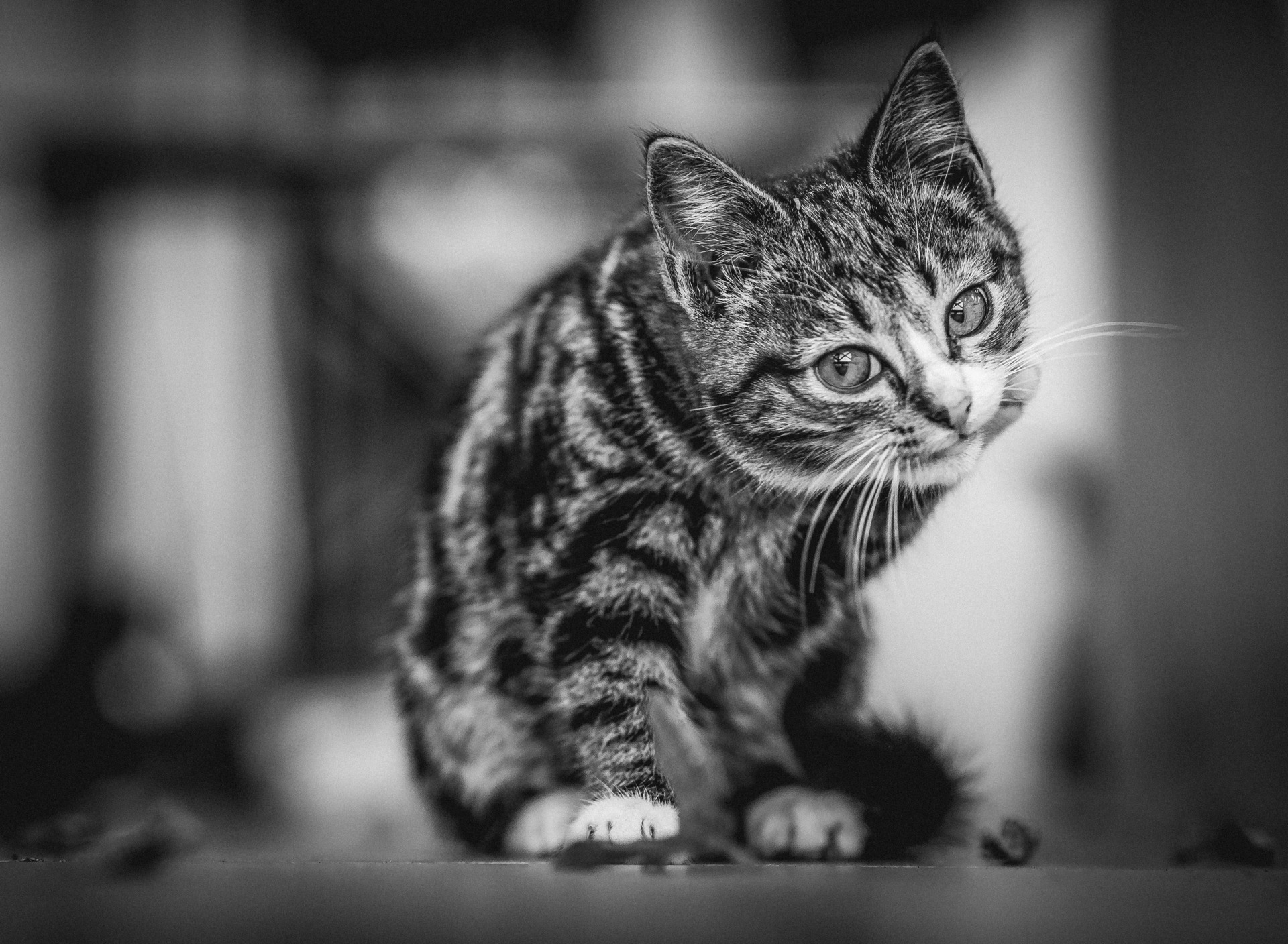 поток черно белые рисунки кошки фото структуре кишечника тонкая