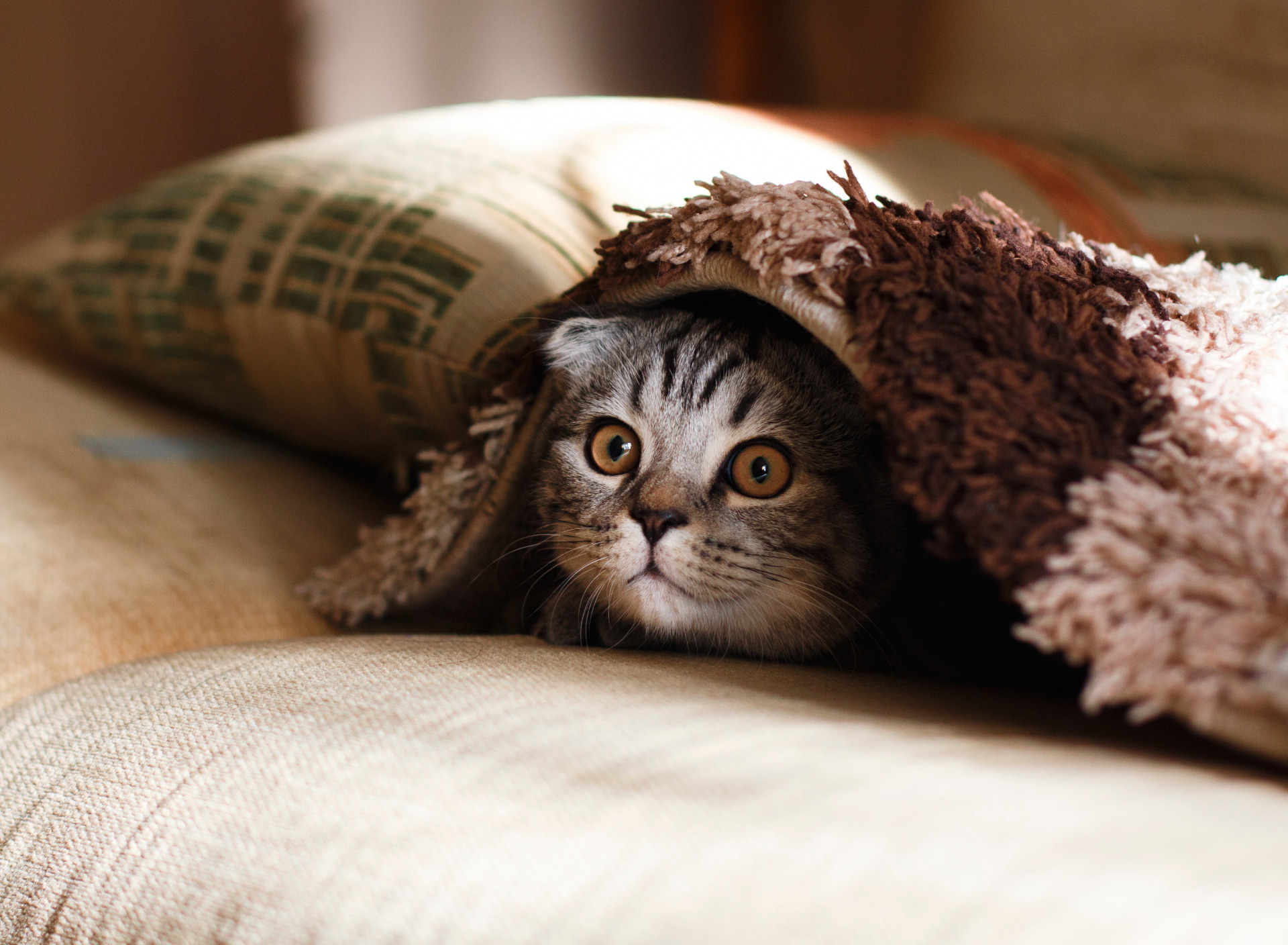 фото котенка под пледом огне смайлики картинки