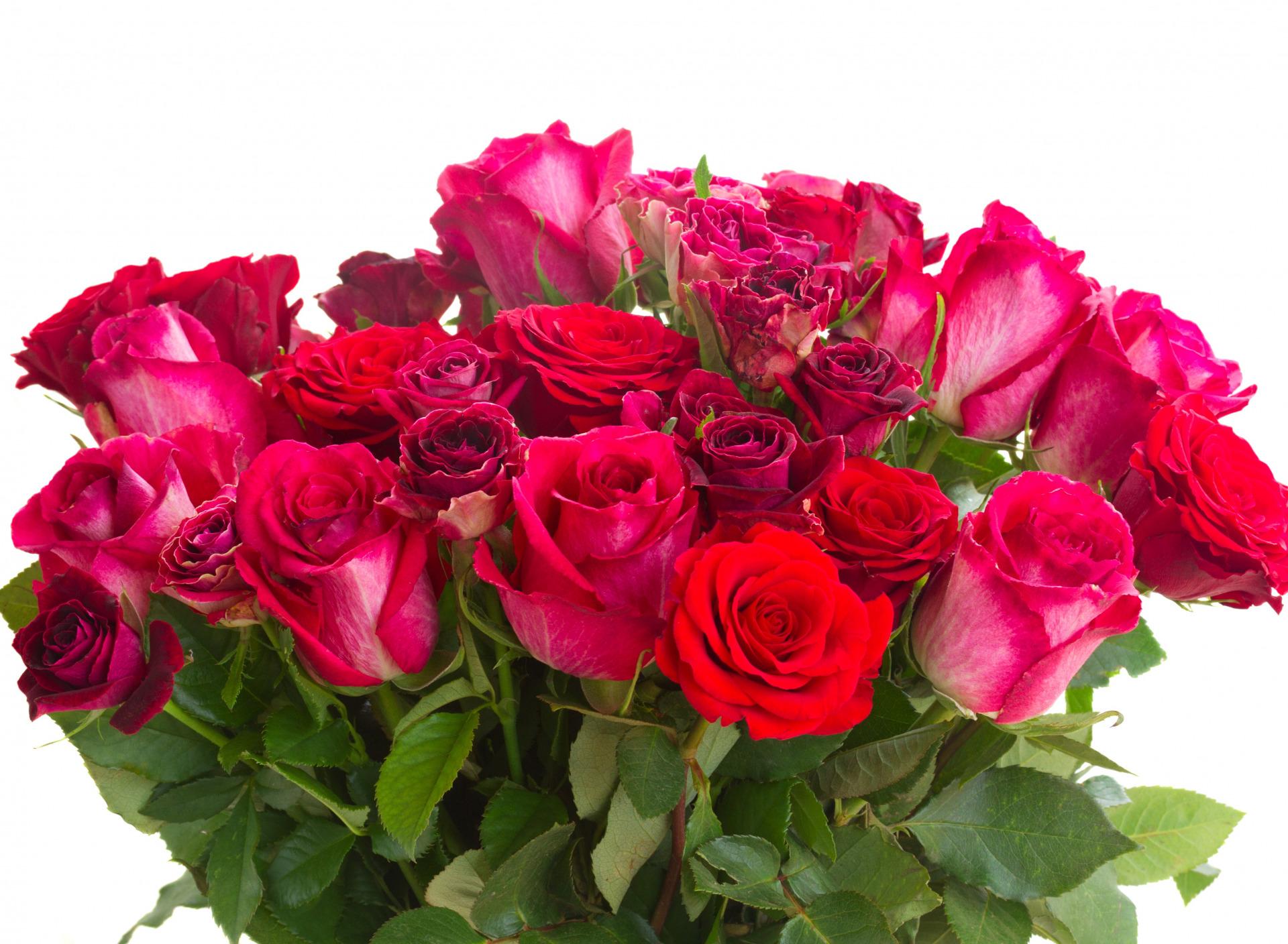 Перед, букет роз на белом фоне открытка