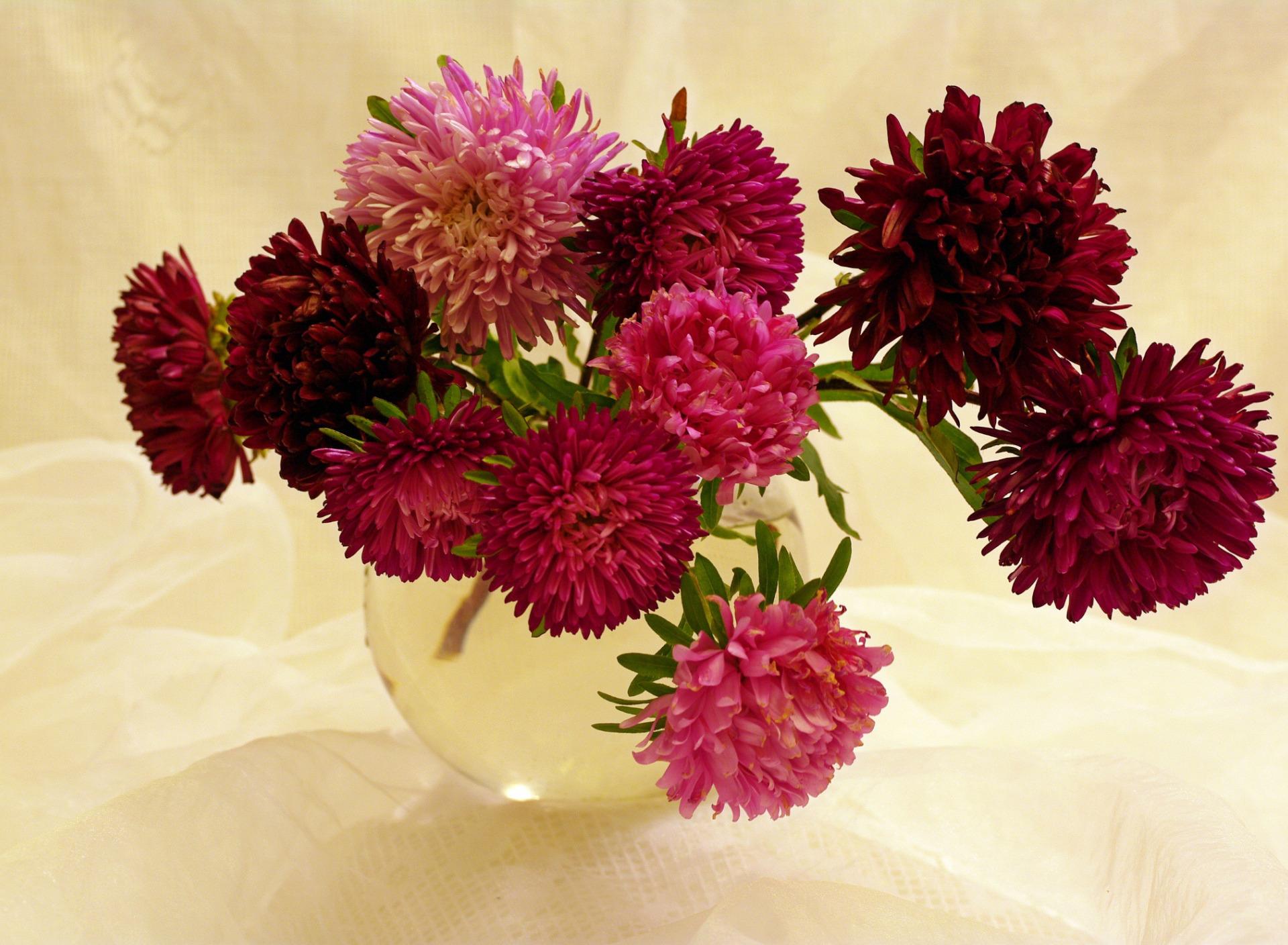 картинки букет астр цветы игрушка или другое