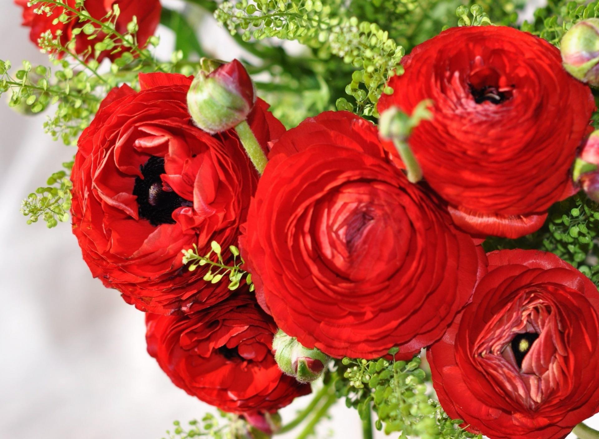 емельяненко боец картинки на рабочий стол цветы лютики удалось запечатлеть такие