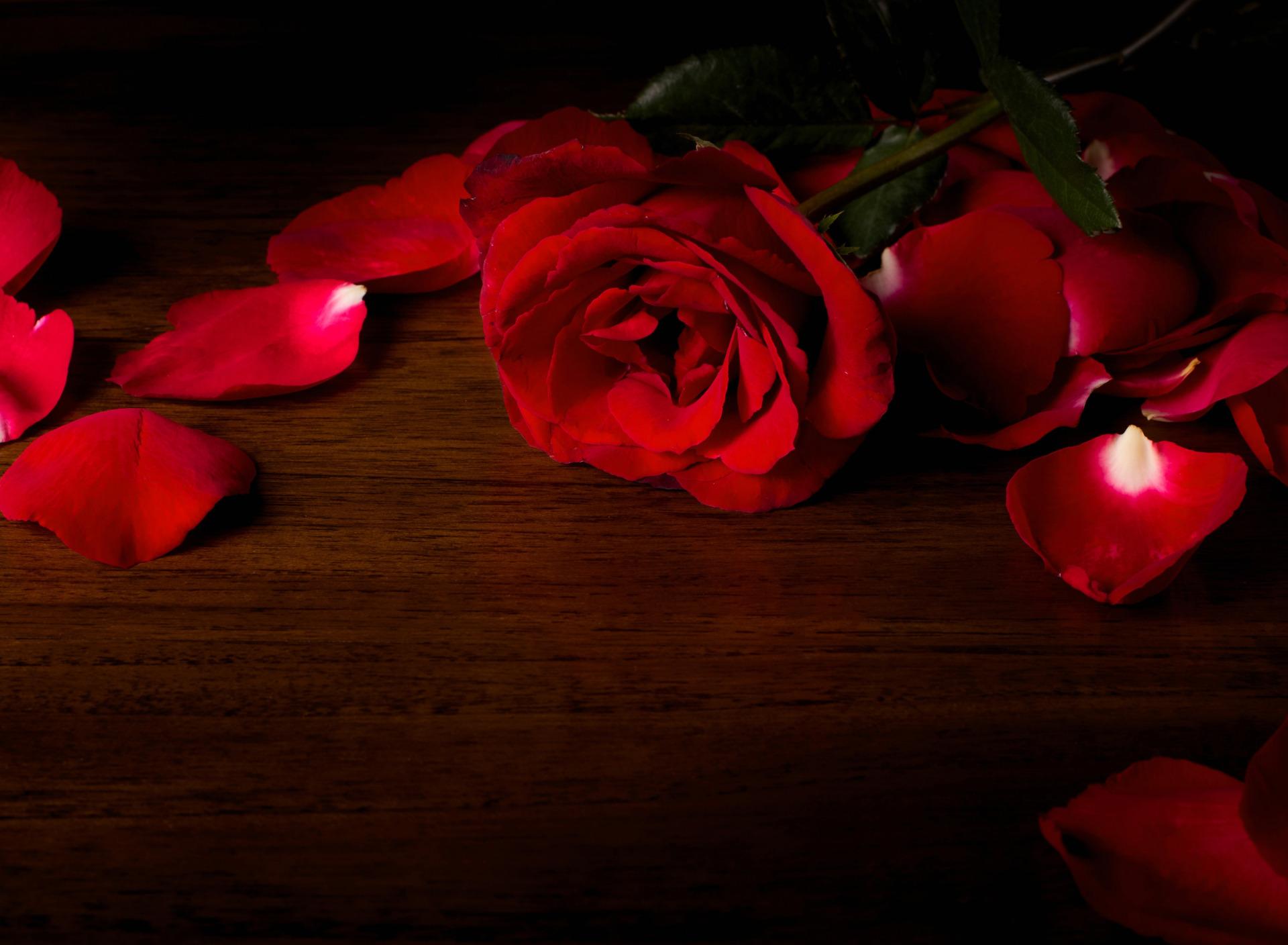 приема картинка роза на черном фоне с лепестками этого, болгарку