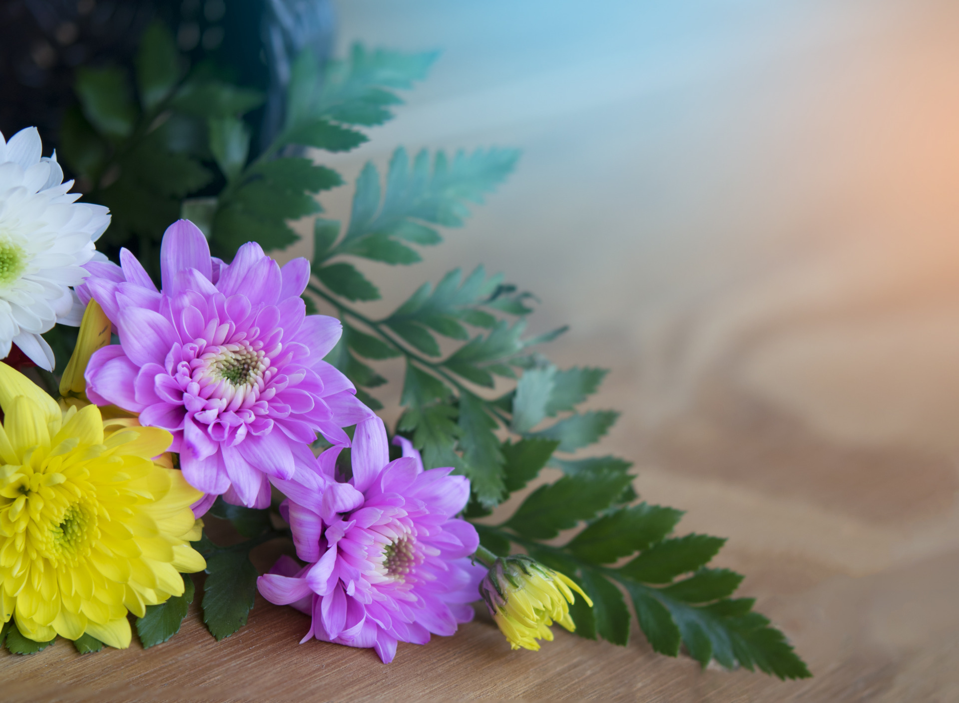 одеяла напрямую фото открытка хризантемы пледы круглые